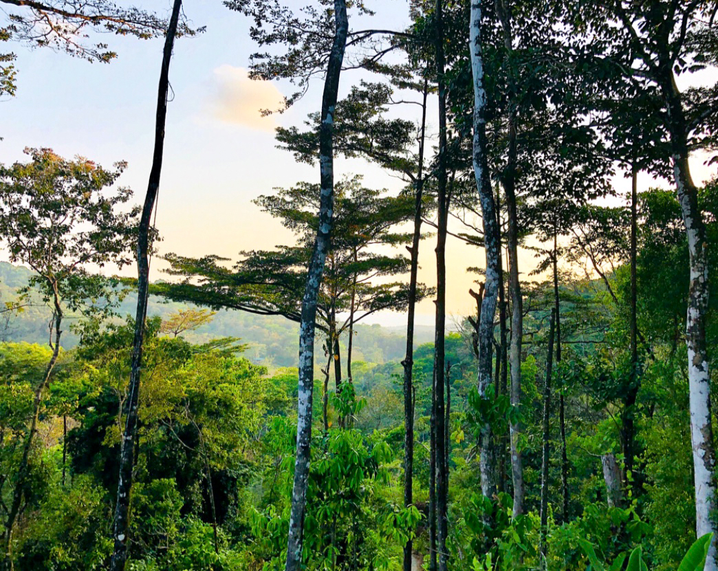 mountainous forest in costa rica