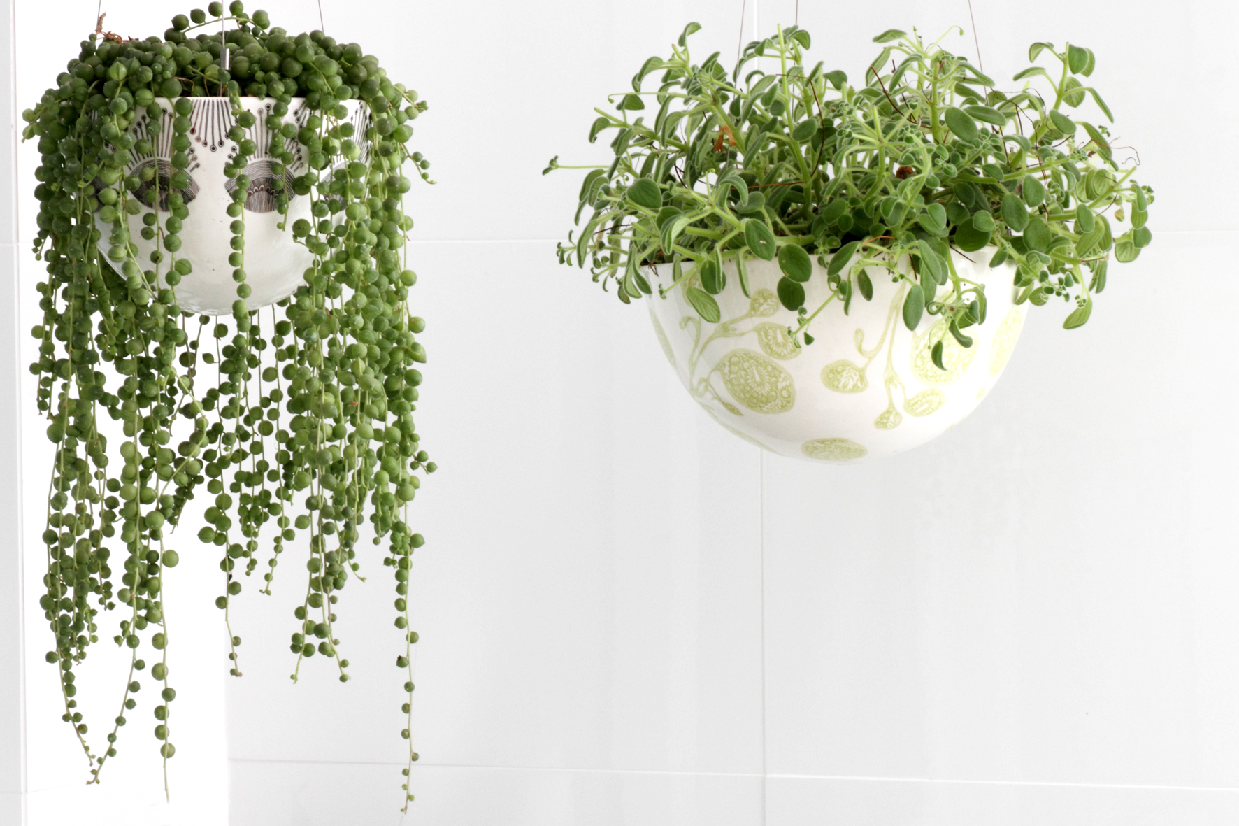 string of pearls plants in hanging baskets