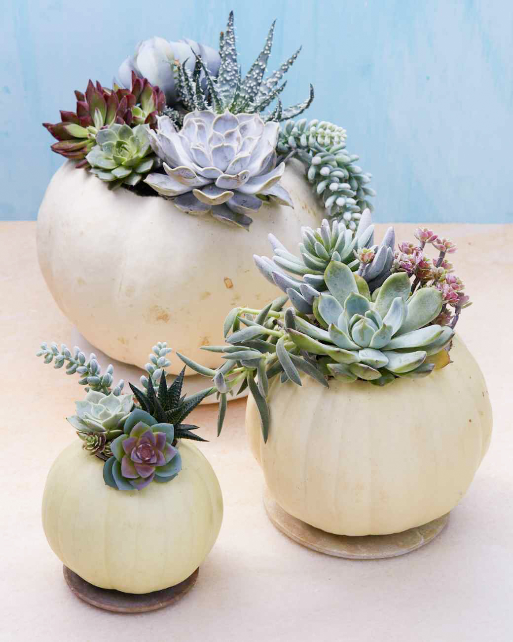 succulent in white pumpkins