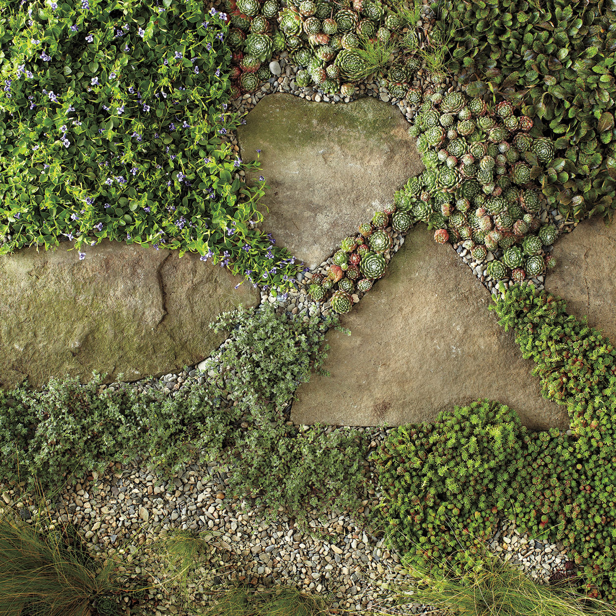 stepping stones with plants and rocks around them