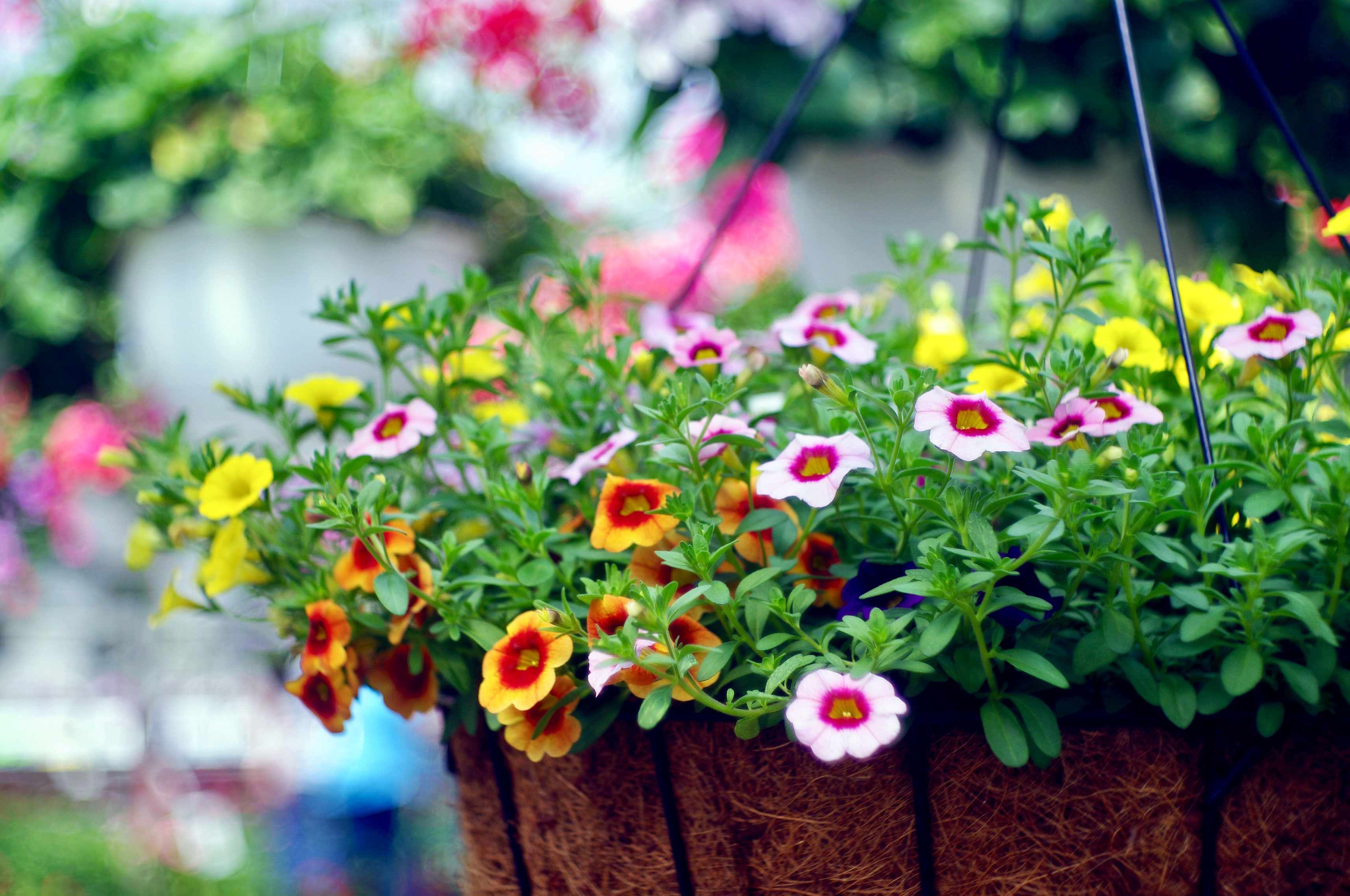 flowers in hanging basket