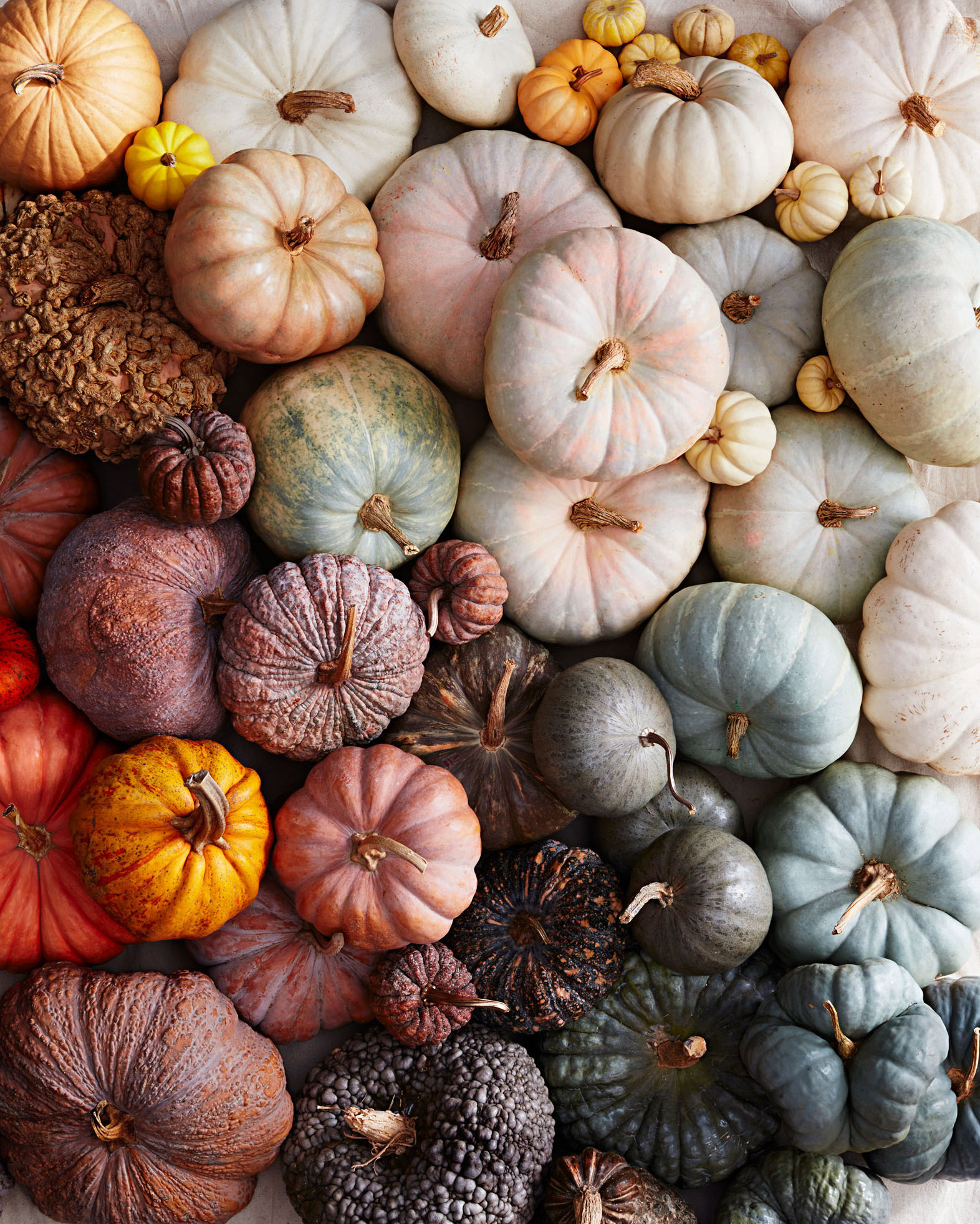A Guide to All the Different Types of Pumpkins | Martha Stewart