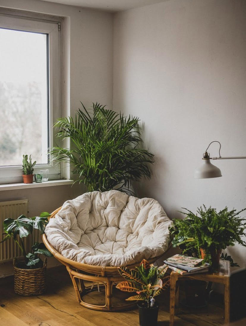 cozy saucer chair and plant nook by window