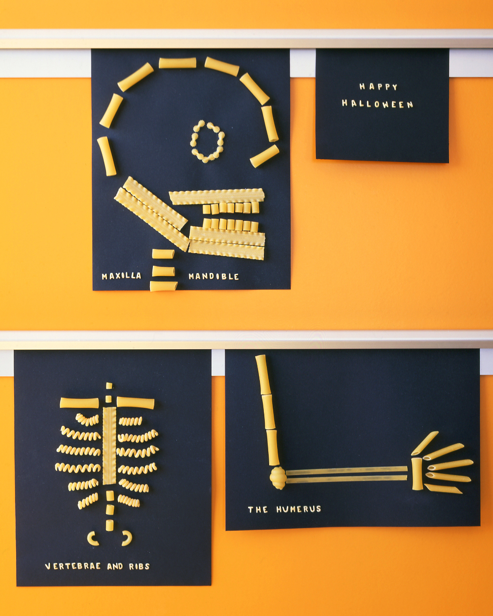 four different pasta skeletons on black paper