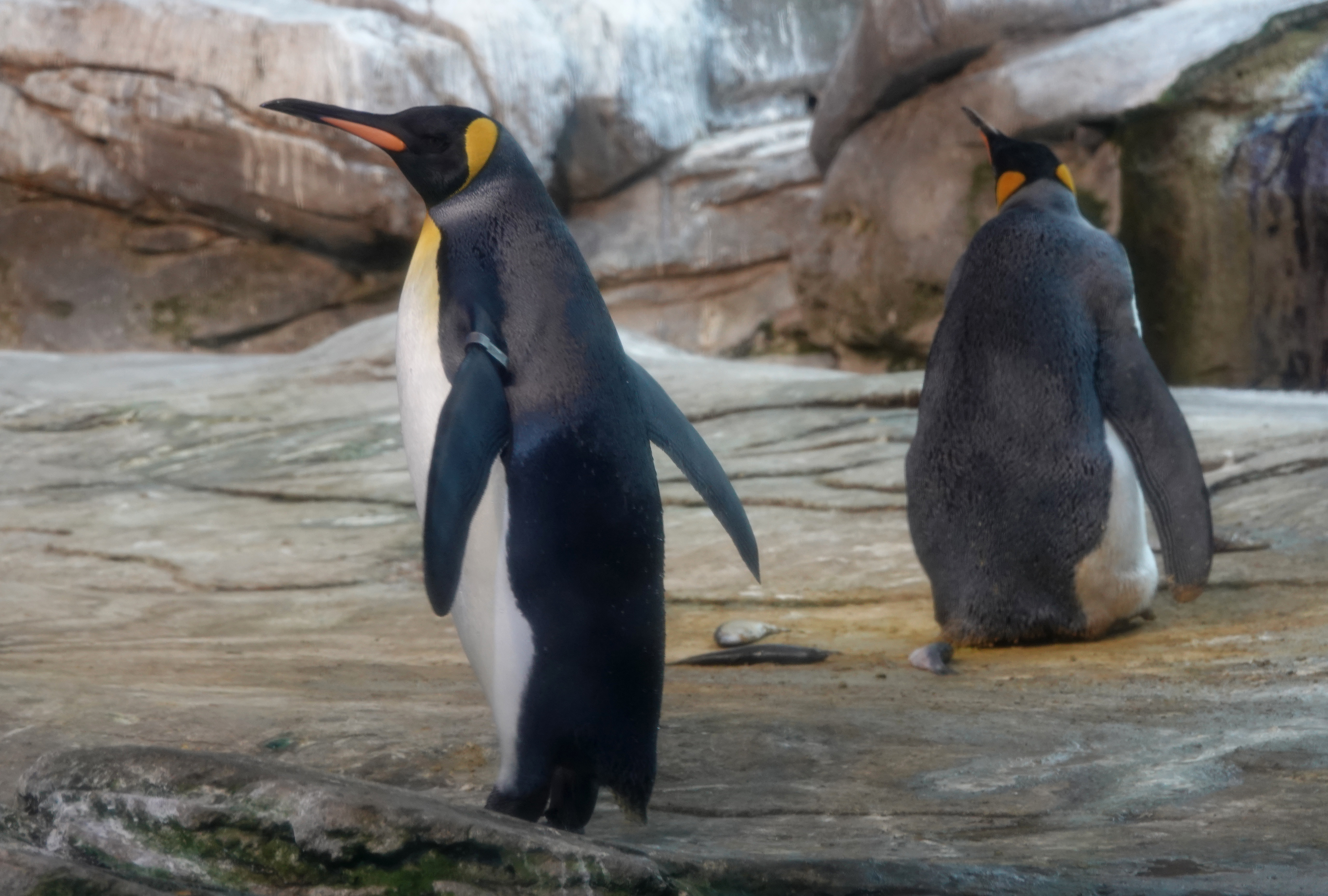 Six Zoos and Aquariums Offering Live Videos of Animals for Free During New Coronavirus Outbreak
