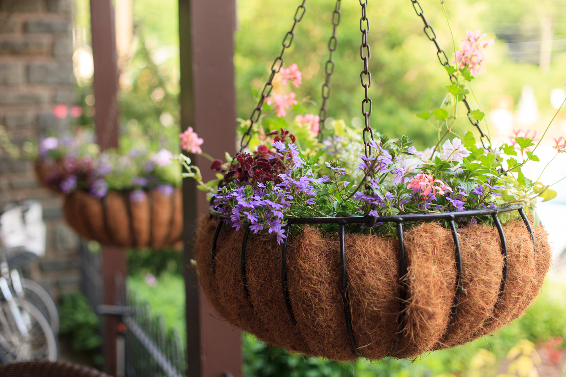 hanging baskets filled with floral plants outside