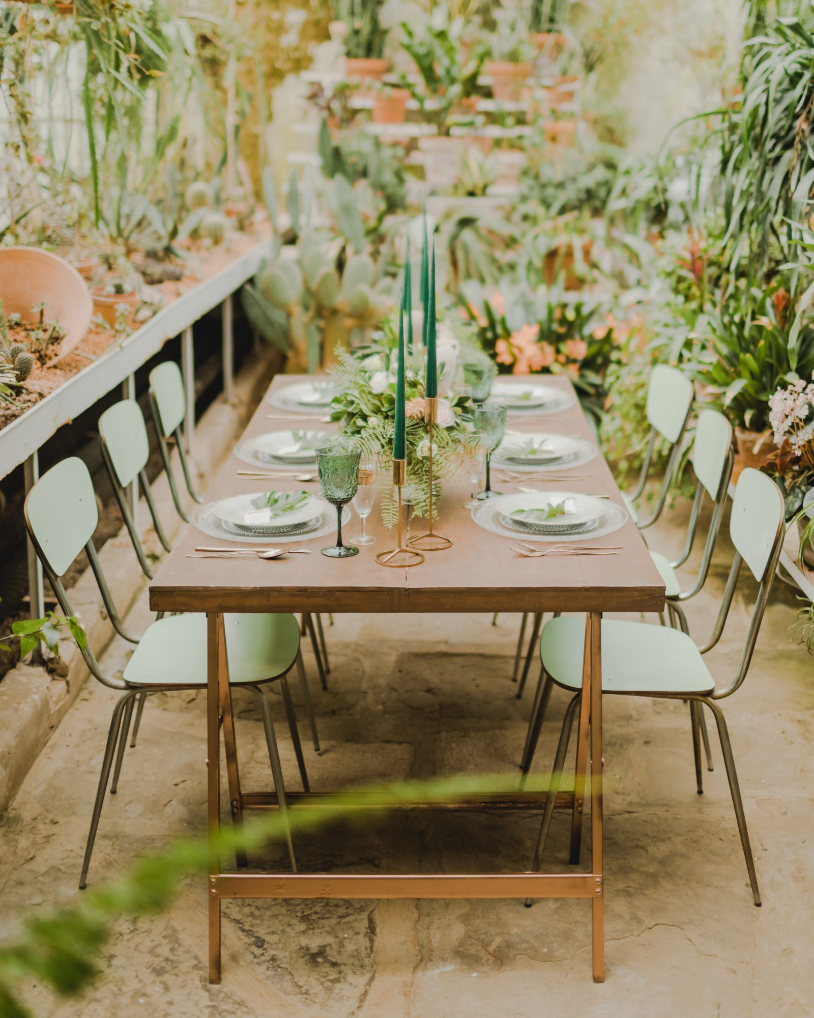 summer rehearsal dinner in greenhouse with cacti