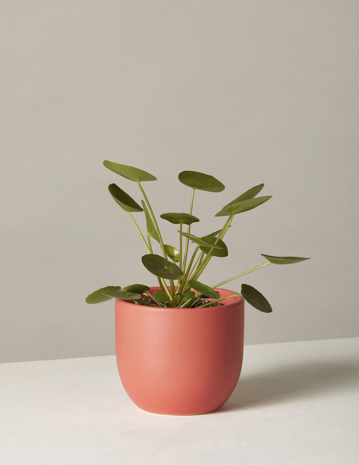green plant in simple red planter