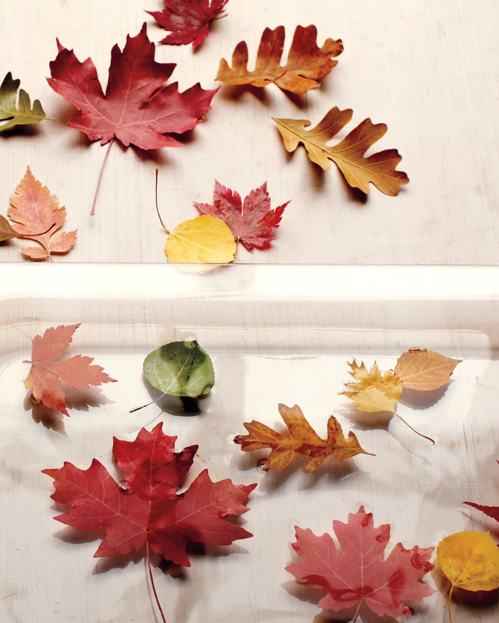 12 Leaf Crafts That Celebrate All The Colors Of Fall Martha Stewart