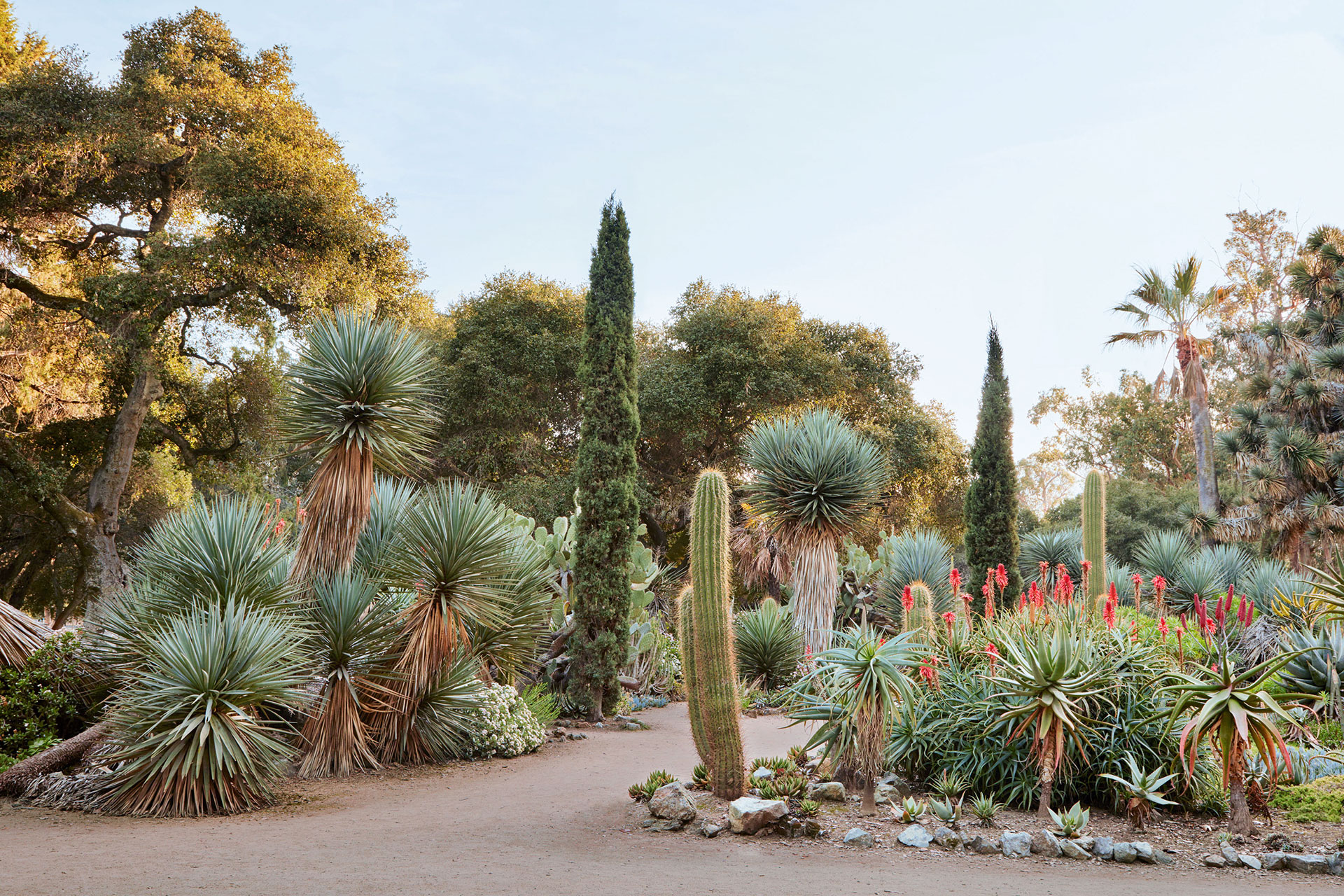 arboretum agaves and yuccas plants