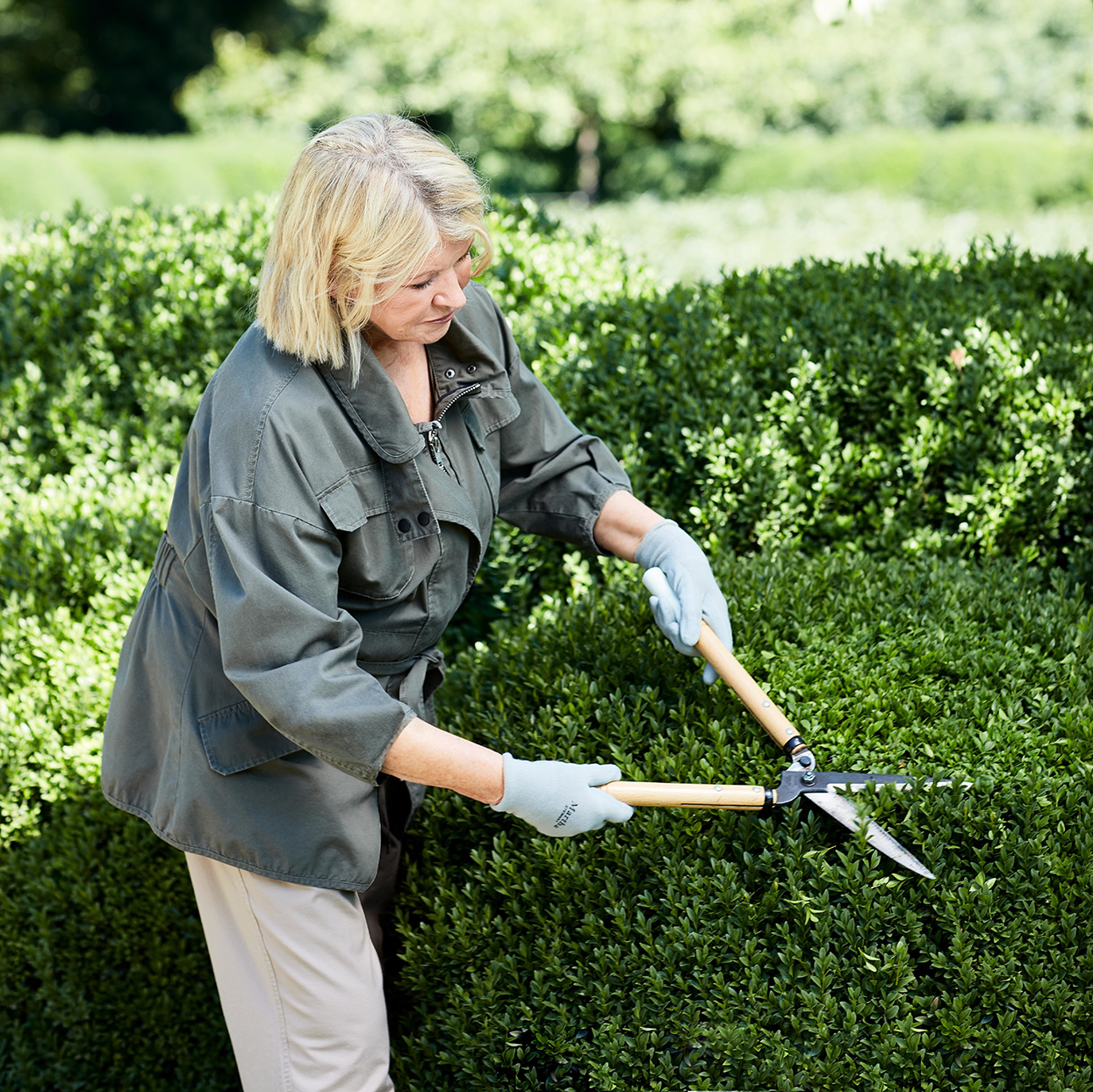 martha pruning hedges