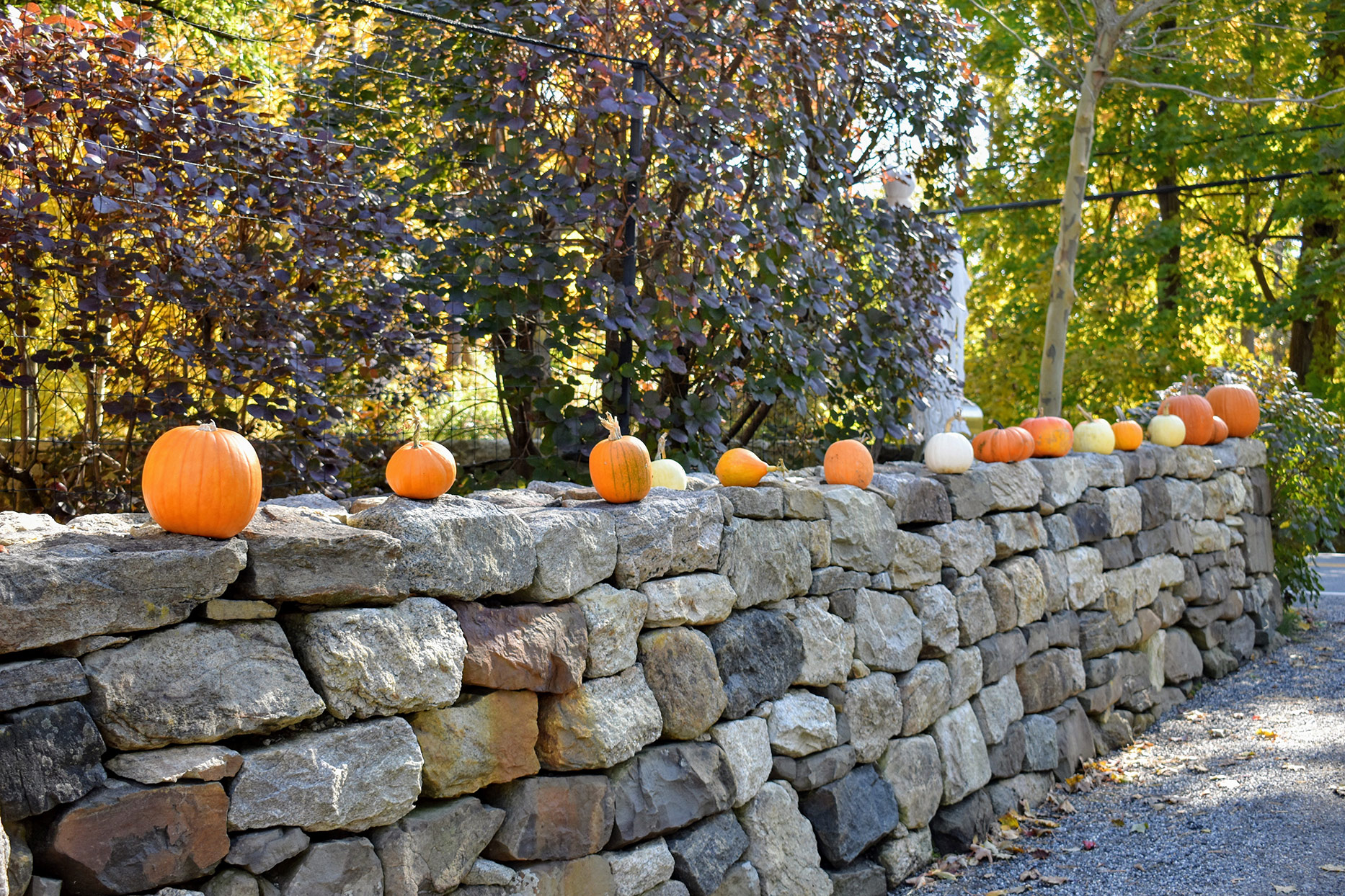 pumpkins on stone wall at bedford property