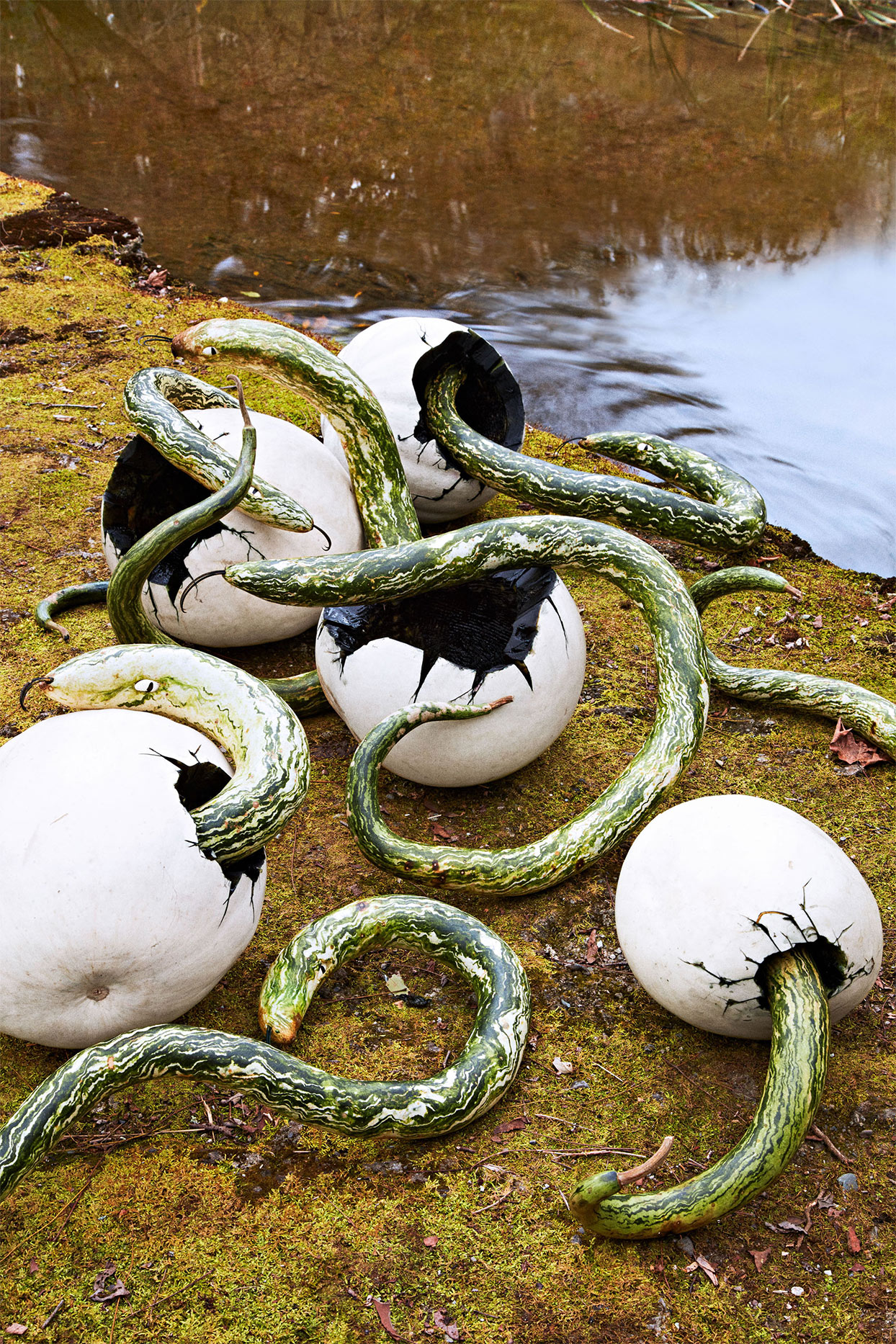 white pumpkins sculpted to be a snake and snake eggs