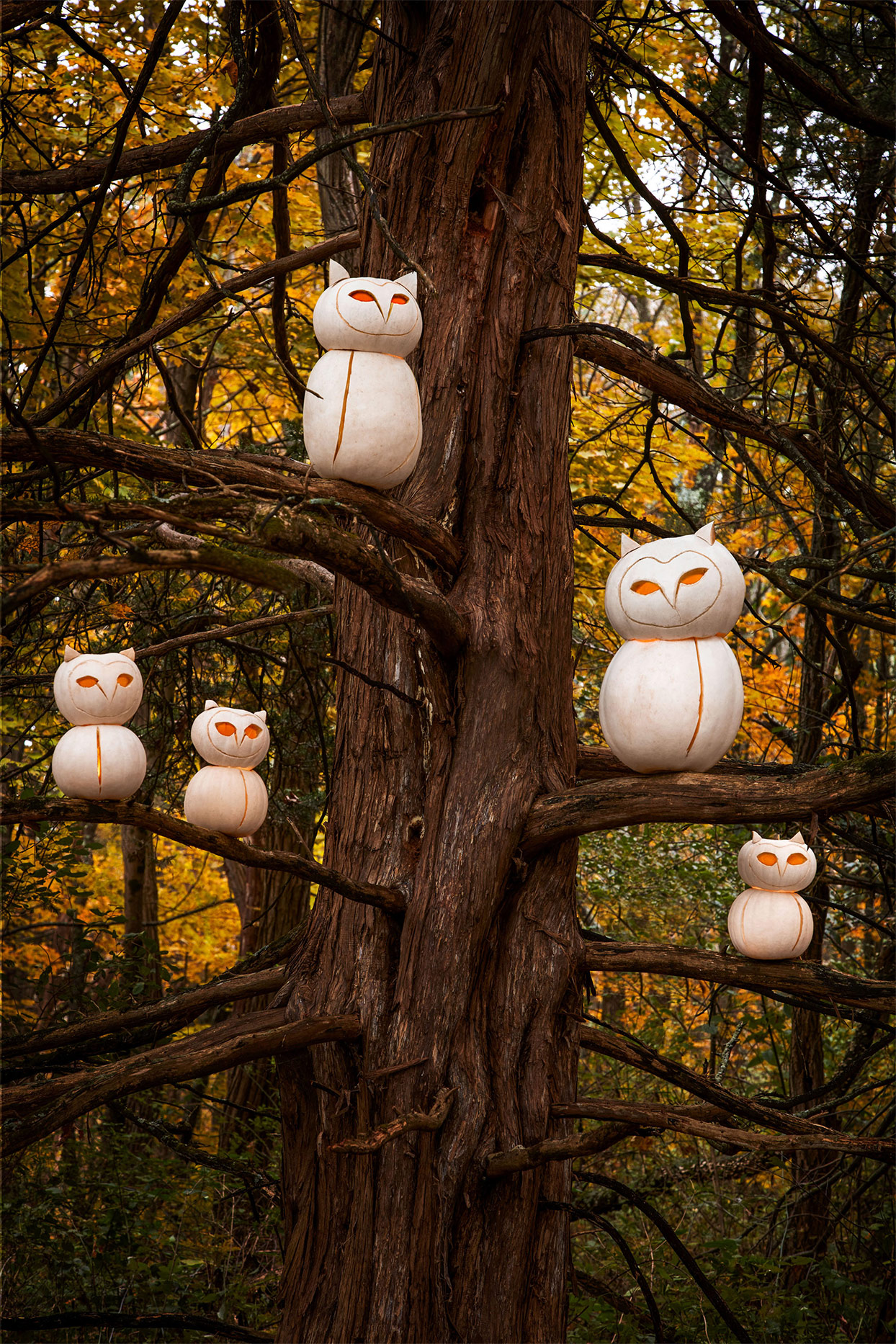 white pumpkins sculpted to be owls