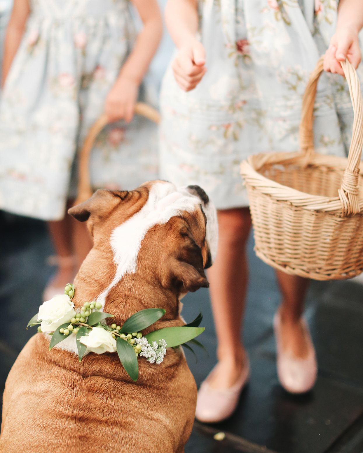 pia davide wedding dog with floral neck accessory