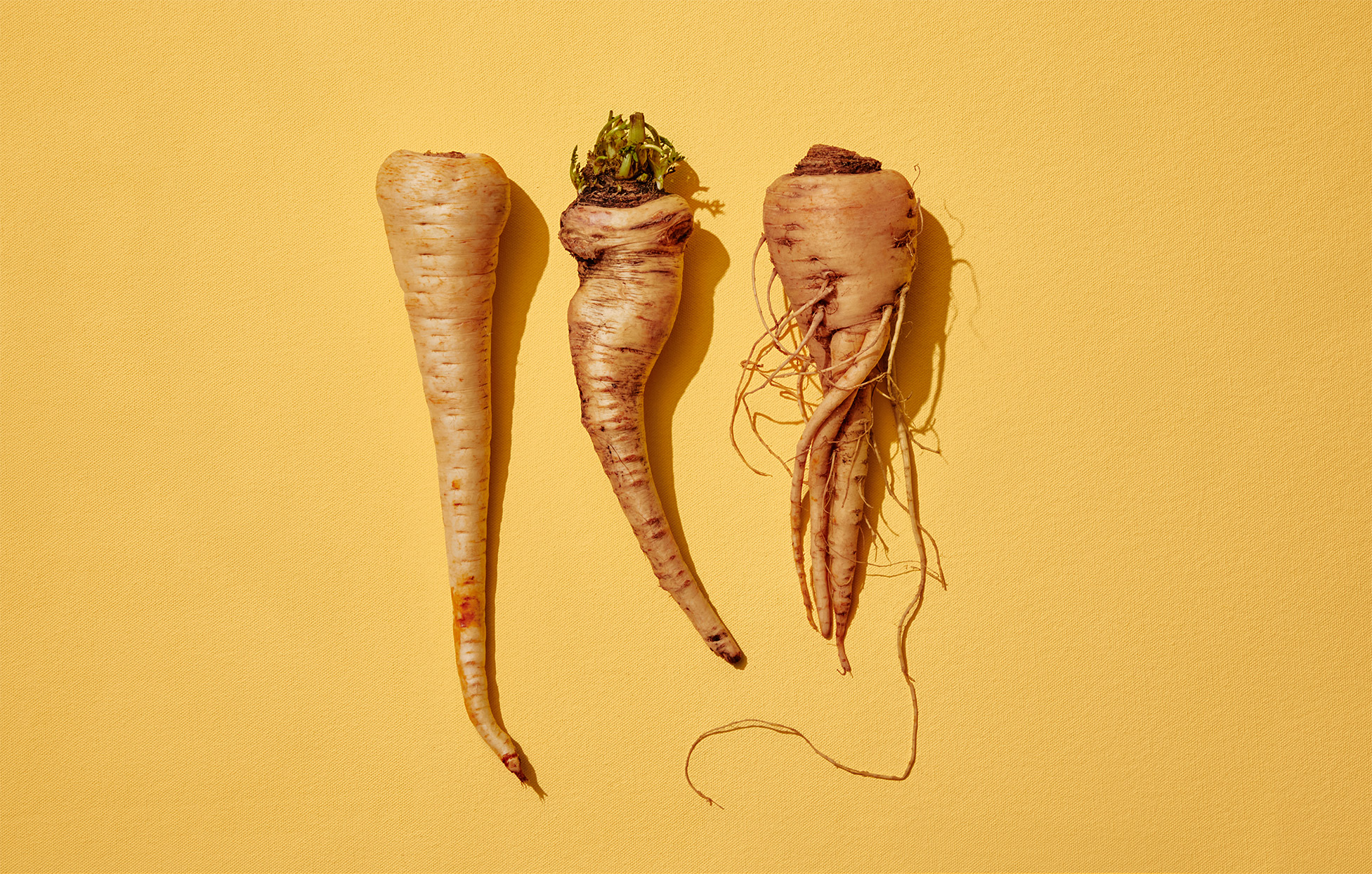 three parsnips against a yellow background