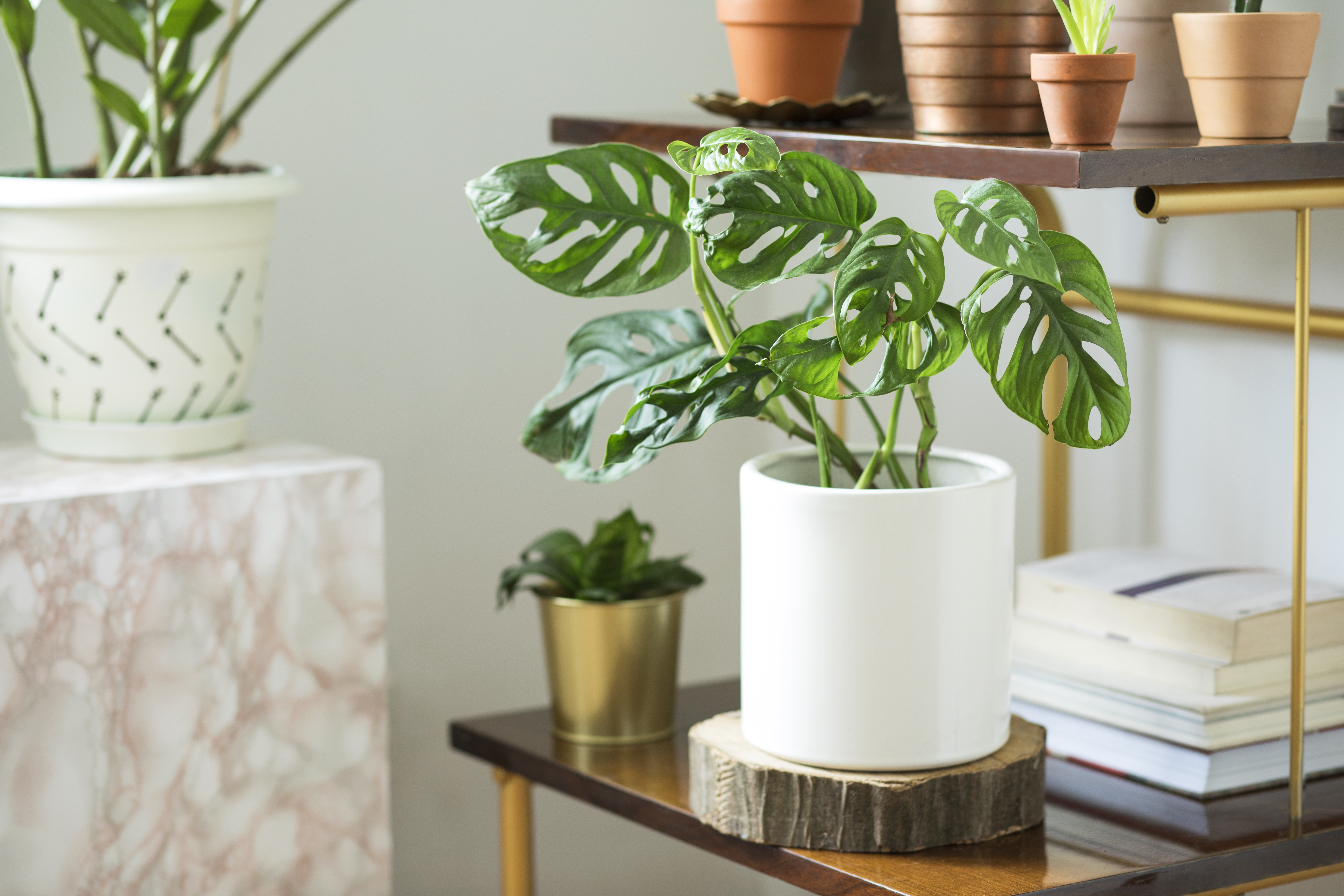 Plant in a modern cylinder planter in a modern living room.