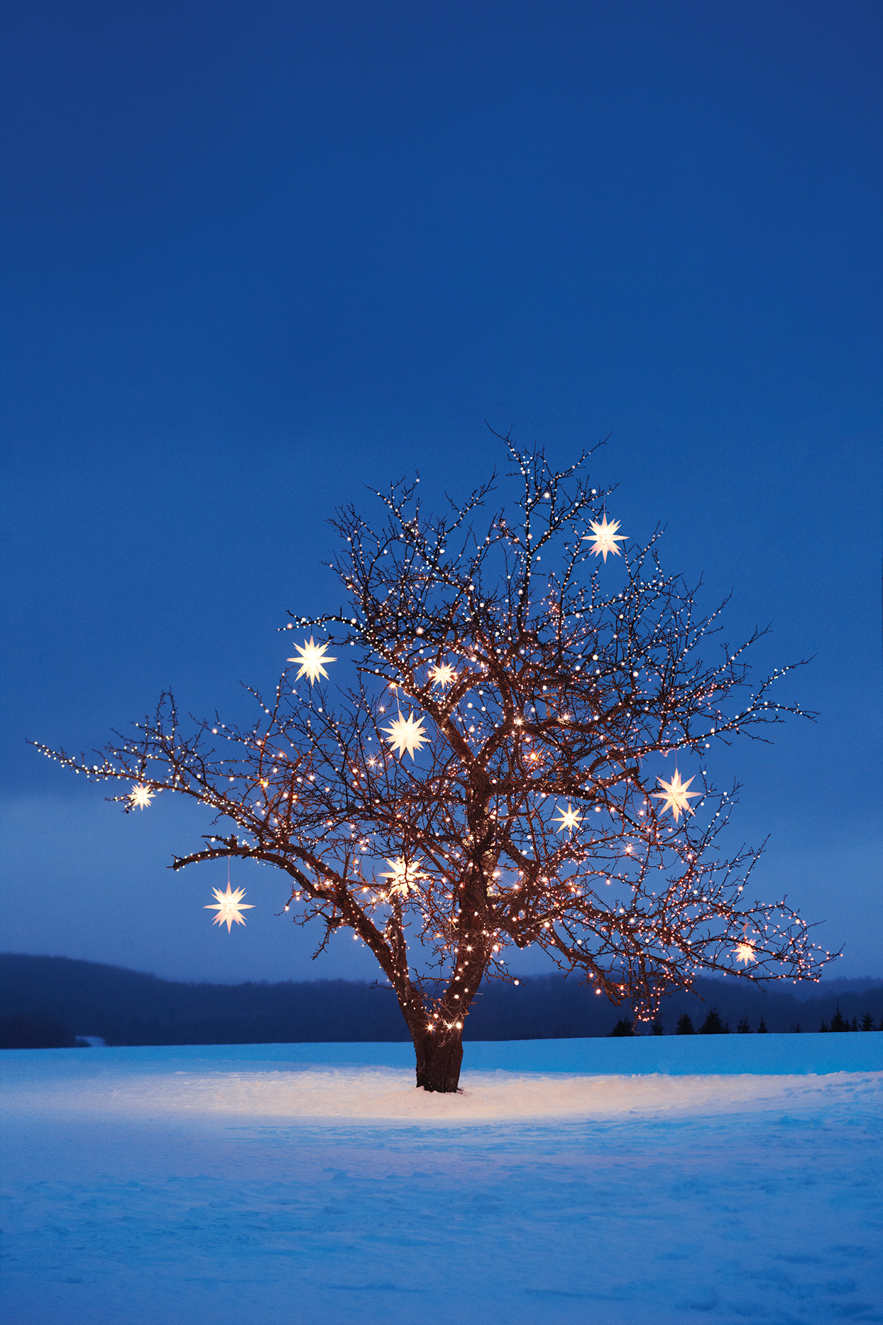 decorated tree in the snow