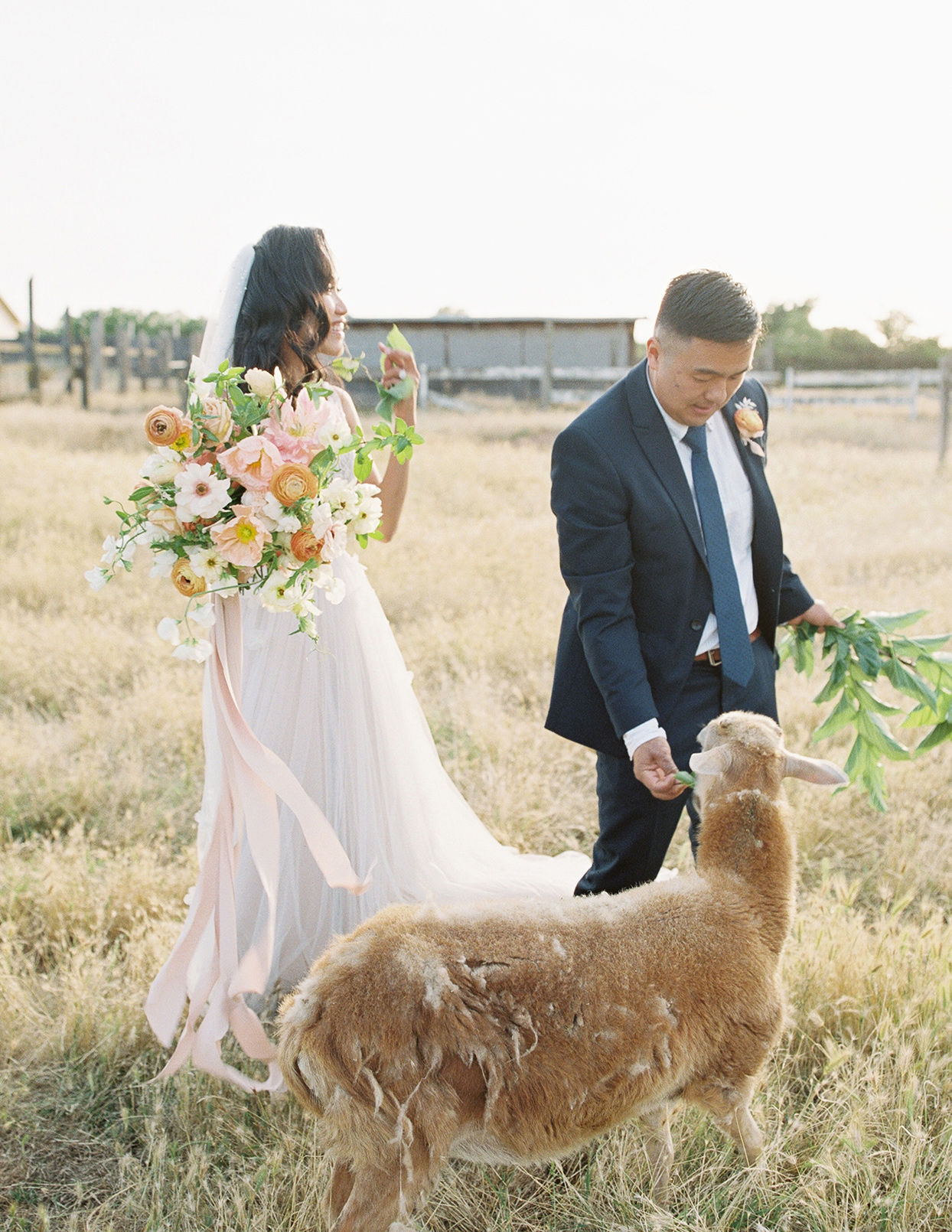 thuy kahn wedding couple with goat in field