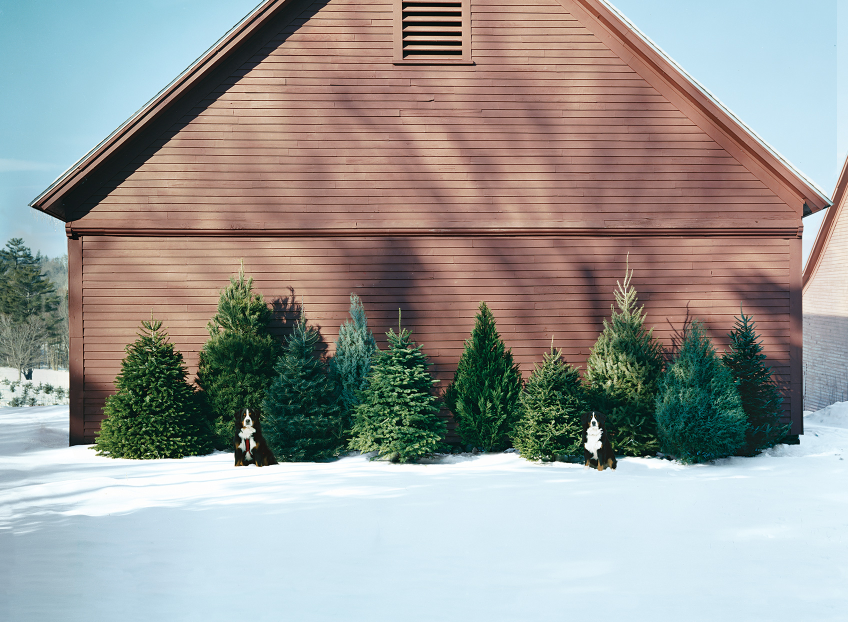 christmas trees in front of brown building