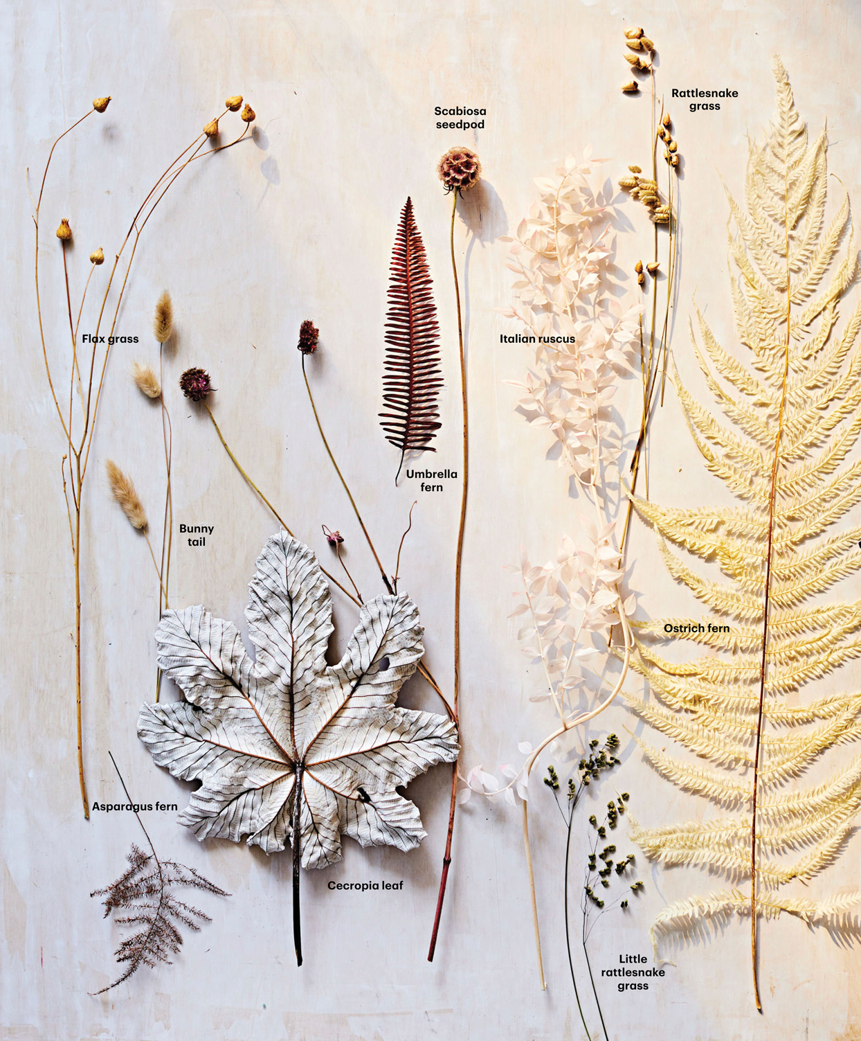 dried flowers and grains with their descriptions