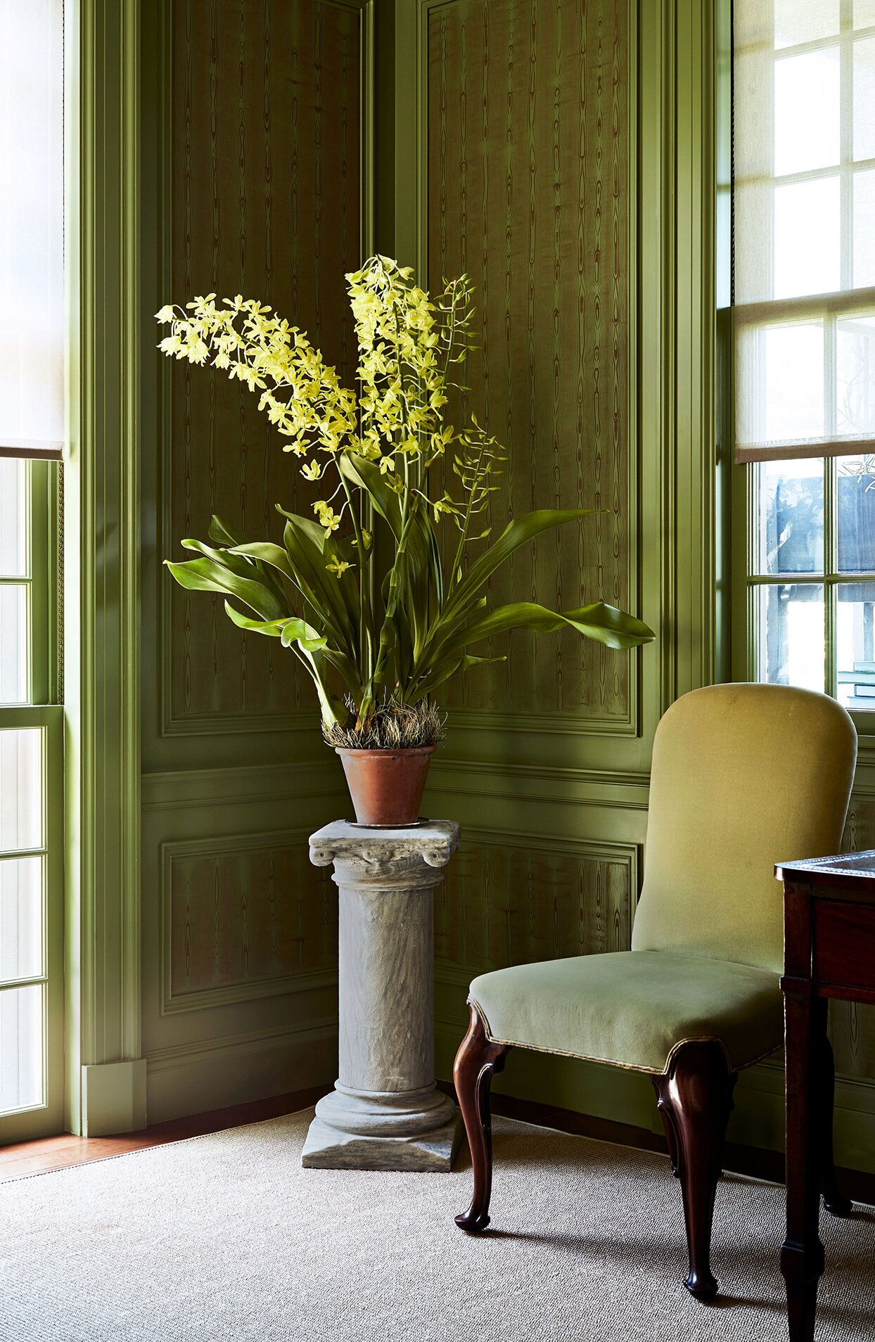 Nine of Martha Stewart\'s Unique, Beautiful Houseplants—Plus ...