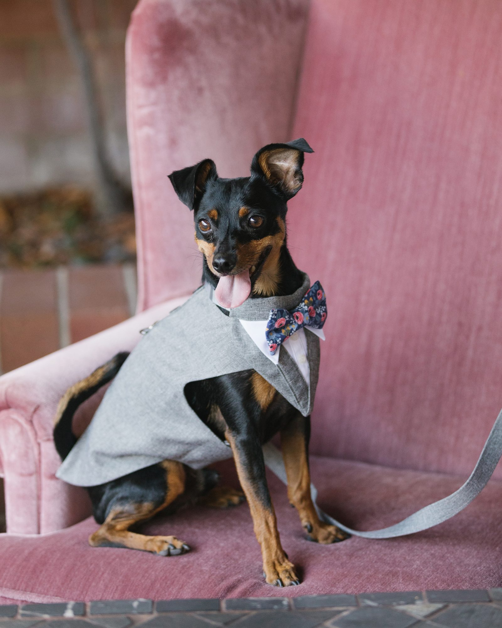 shelana kevin wedding dog in gray tuxedo and floral bow tie
