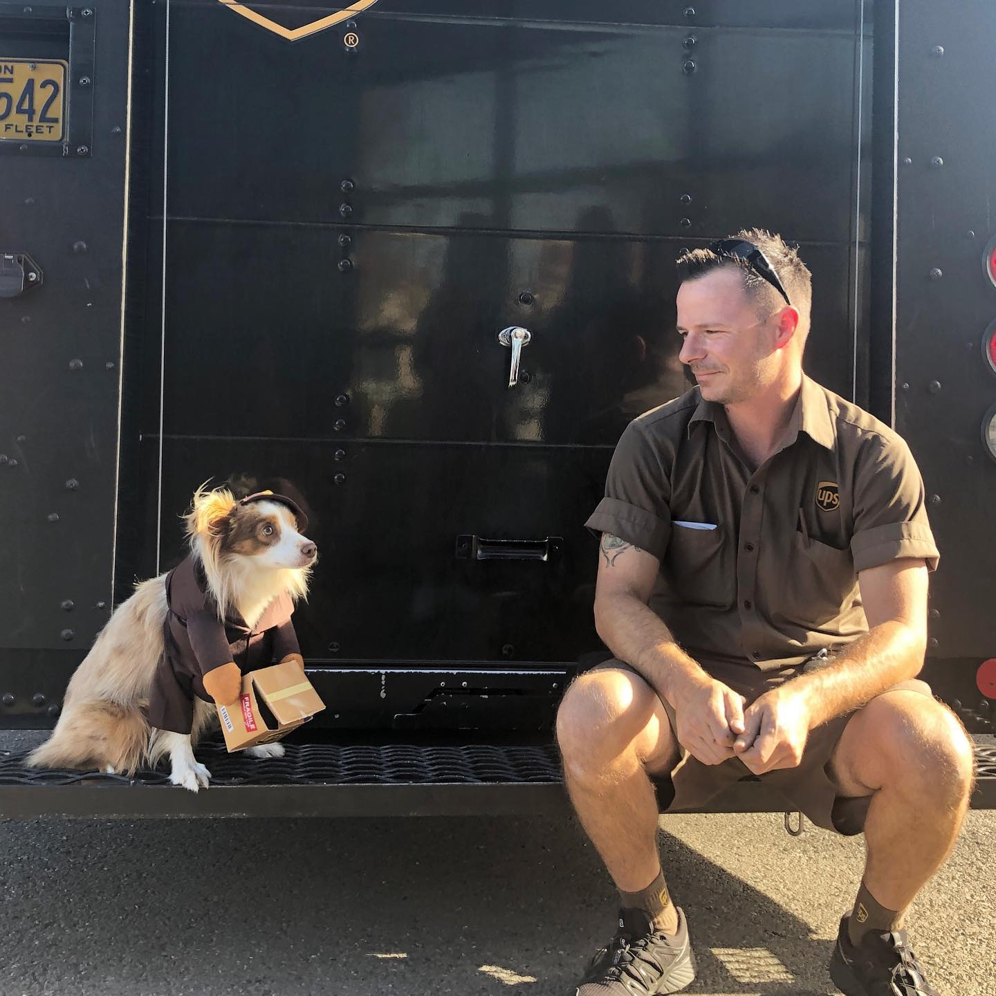 man with dog on the back of a UPS truck