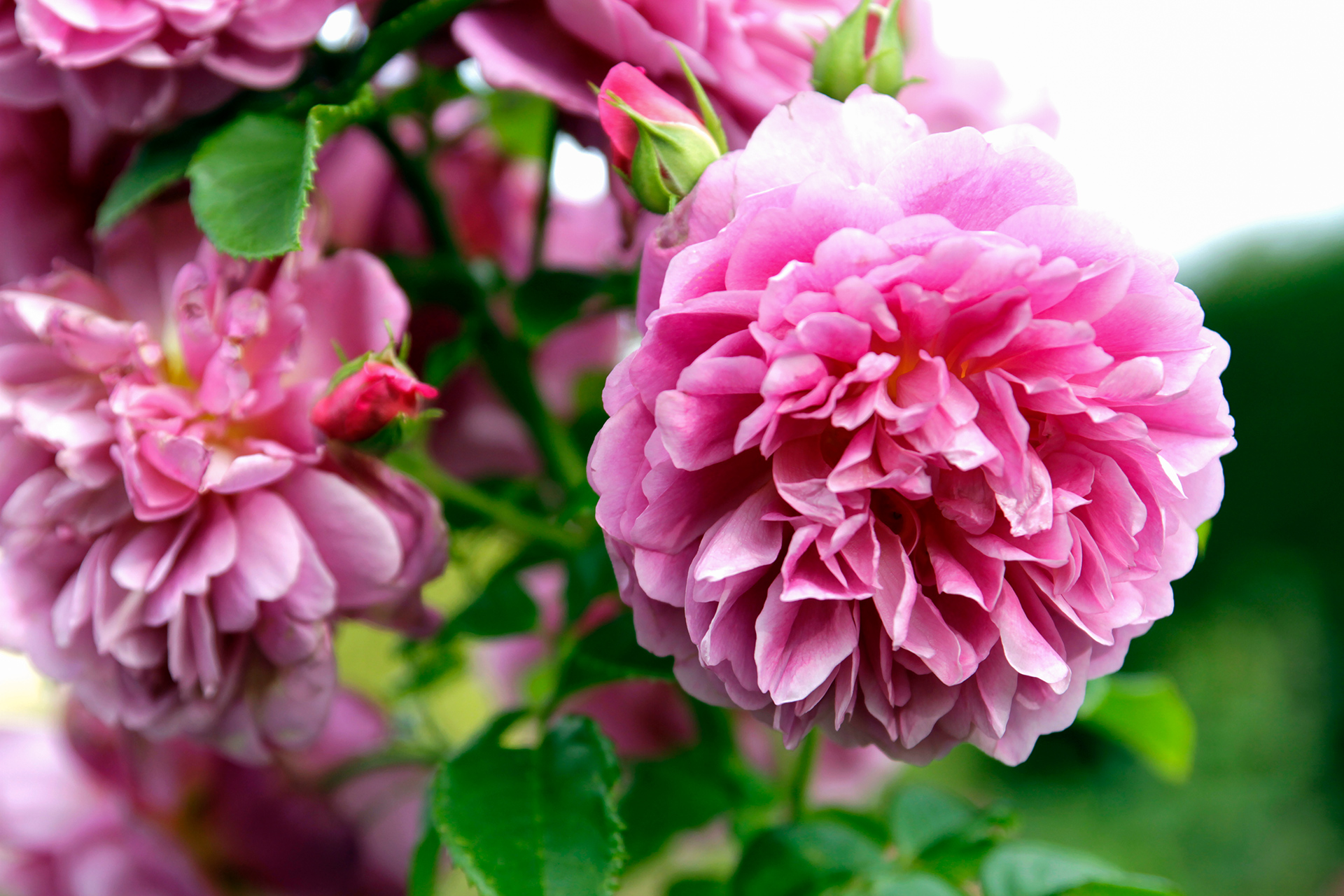 The 10 Most Fragrant Flowers to Plant in Your Garden