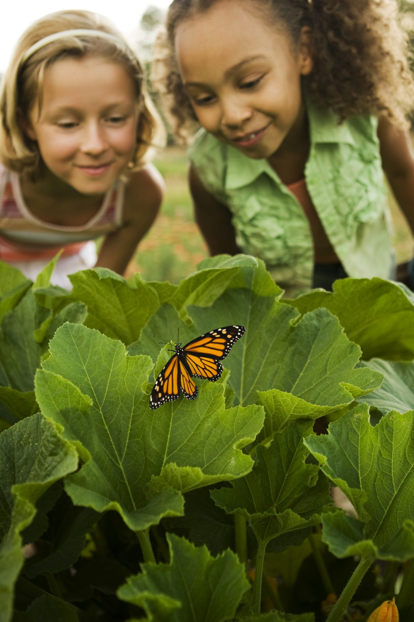 girls looking at a butterfly in garden