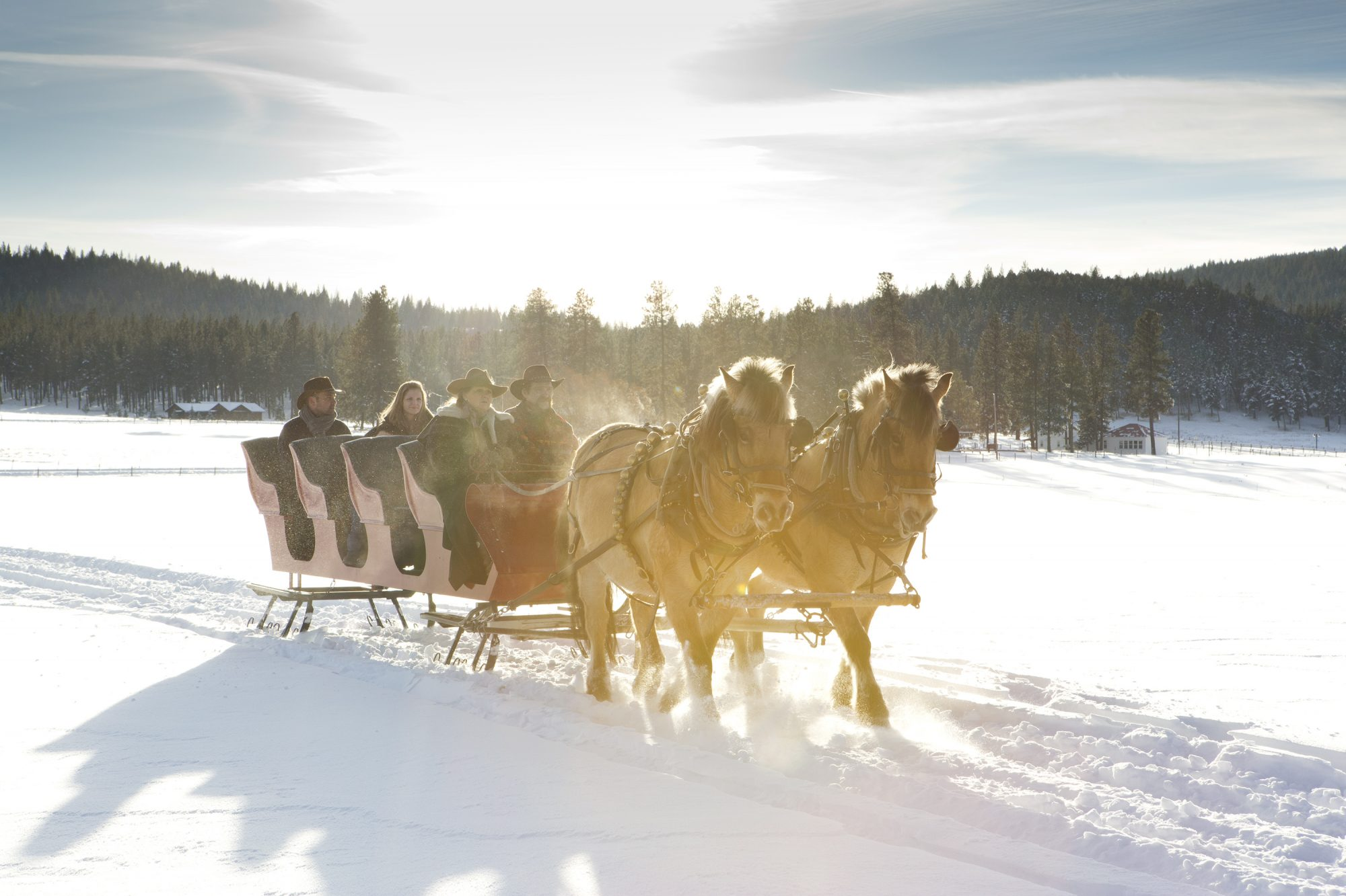 horses pulling sleigh with sun shining