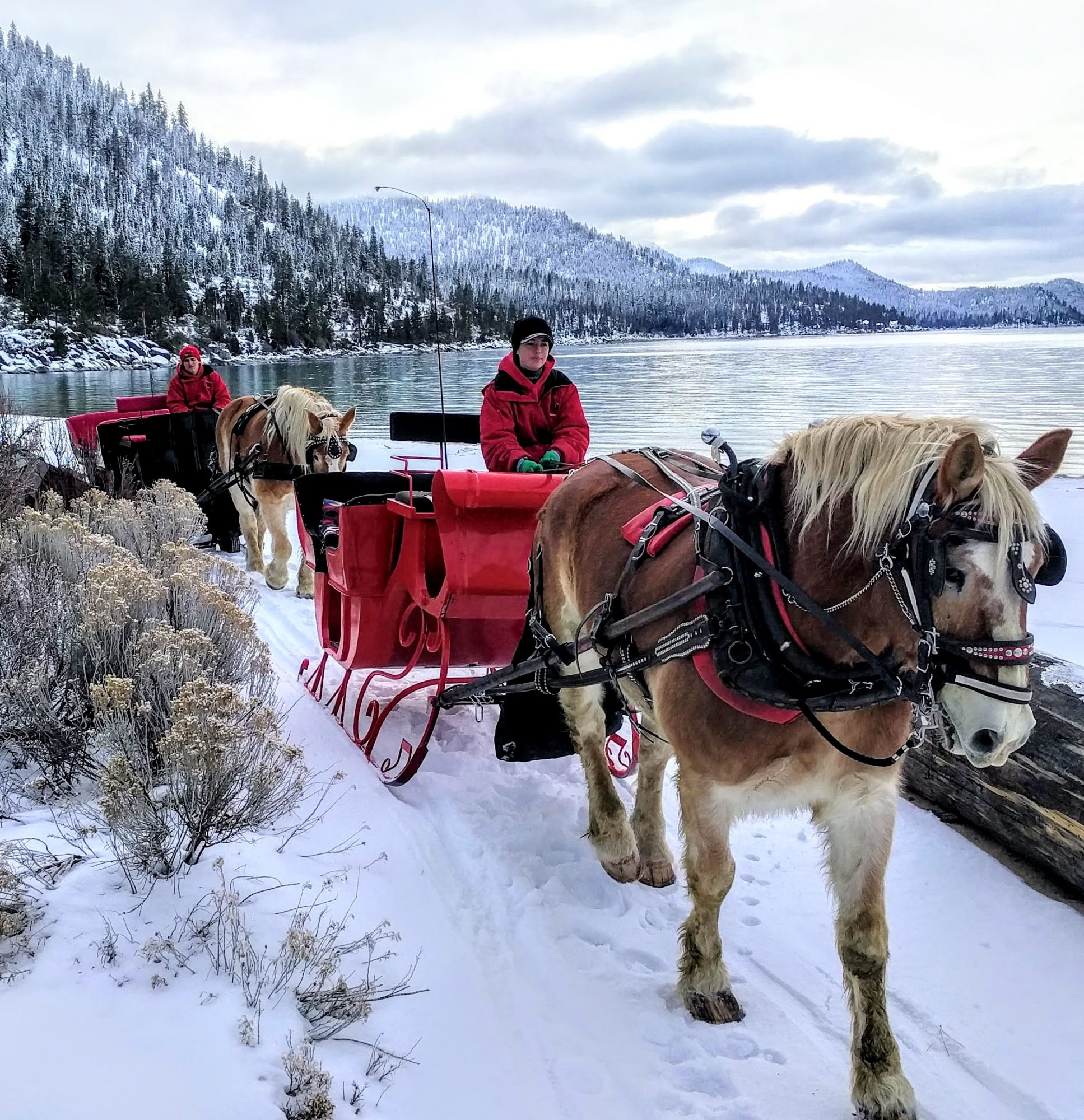 horse pulling sleigh along the lake