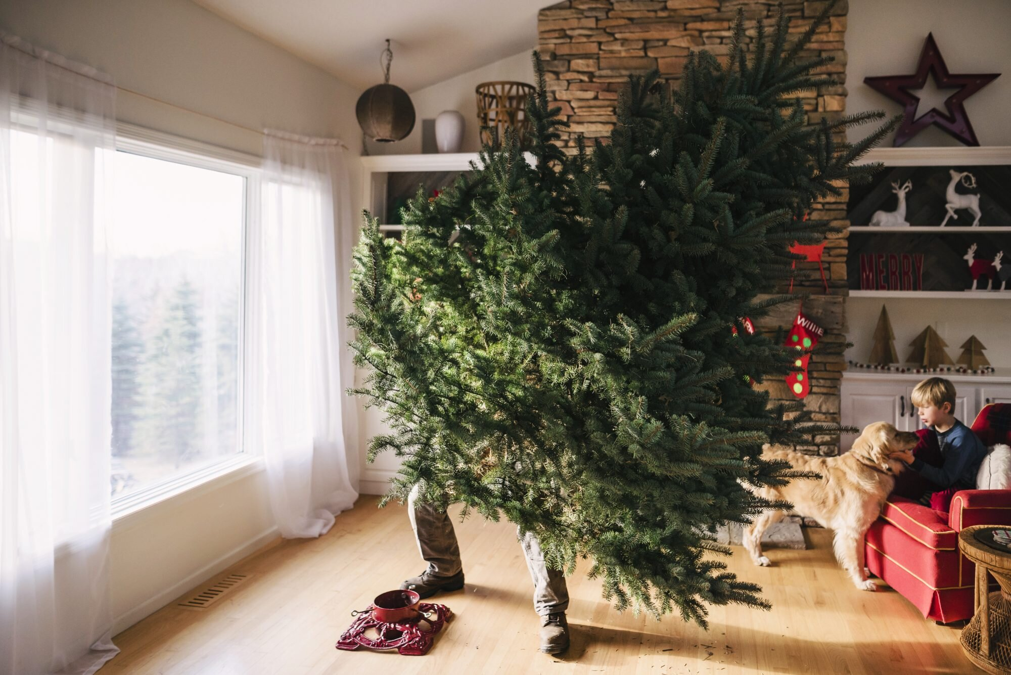 An Editor S Trick To Taking Down A Christmas Tree Without The Mess