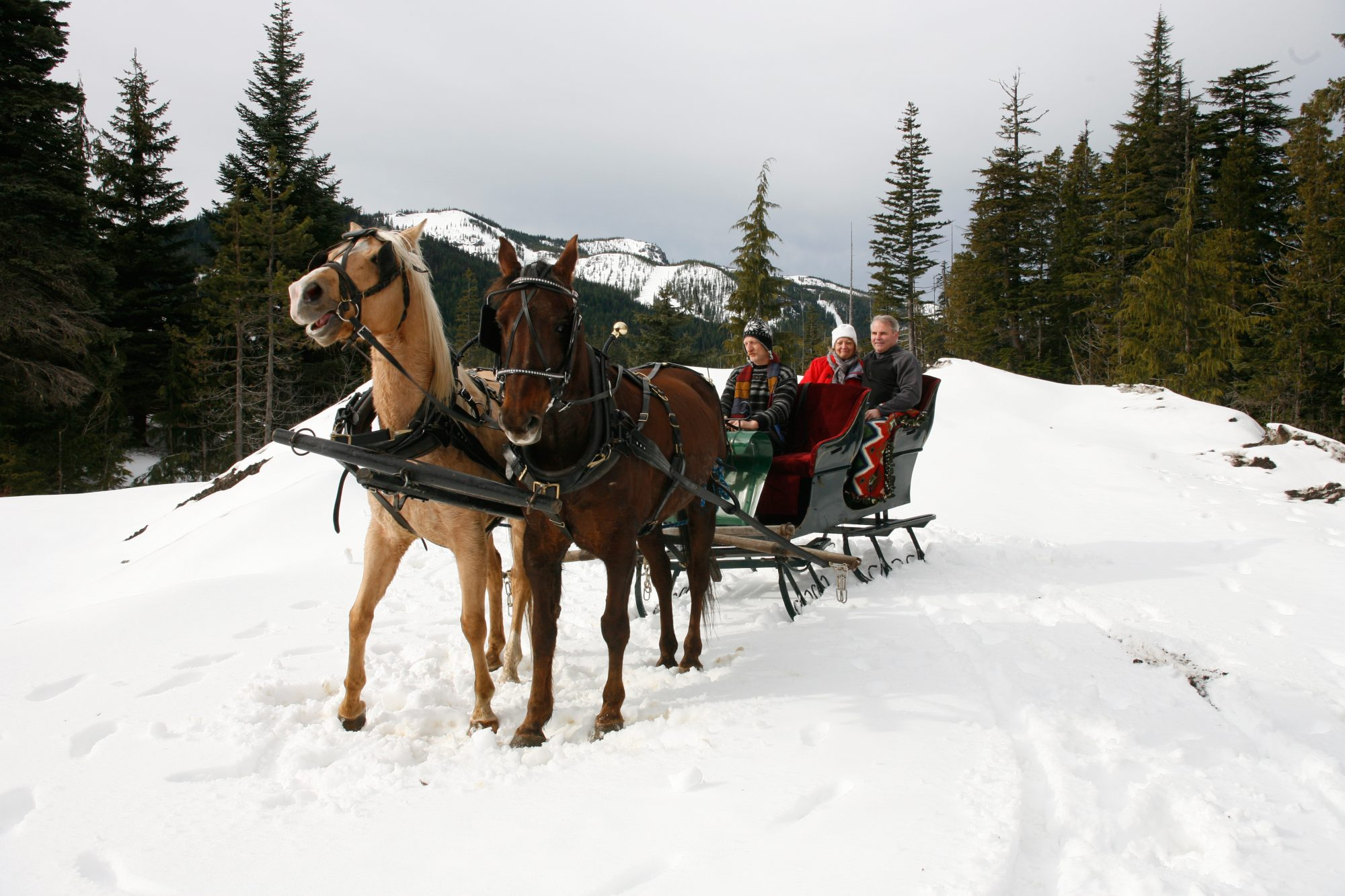 sleigh ride in the snow