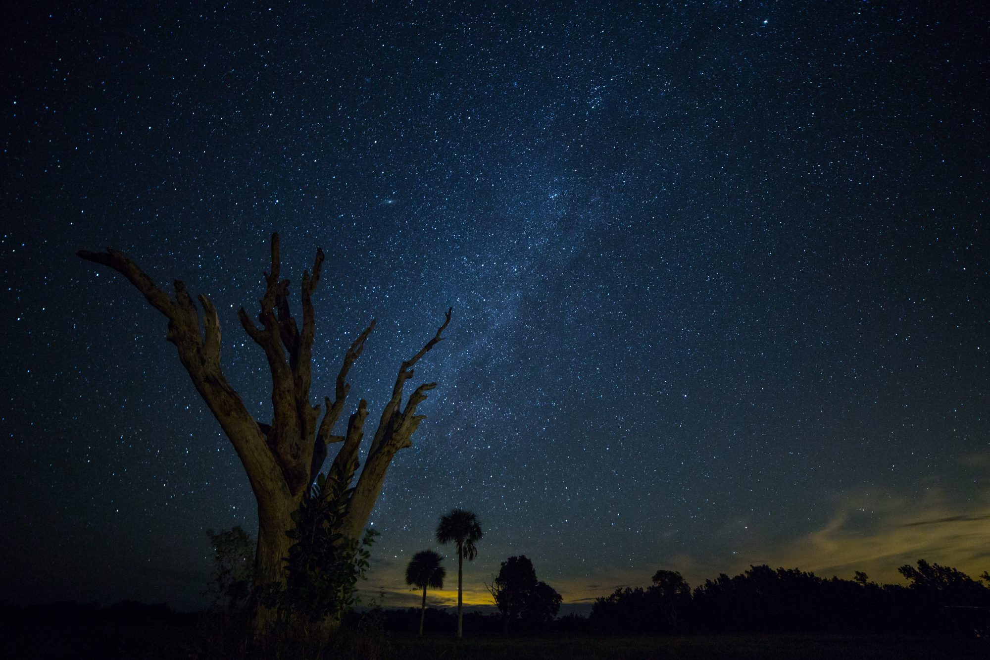 dead tree stands alone among the grassy wetlands surrounded by a starry sky in Florida