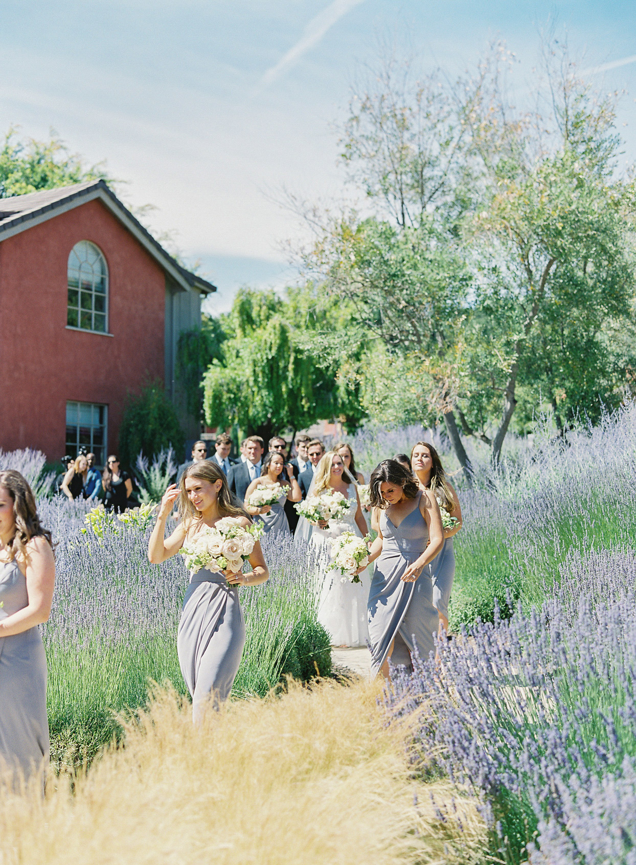 wedding guests and bridal party walking through lavender field