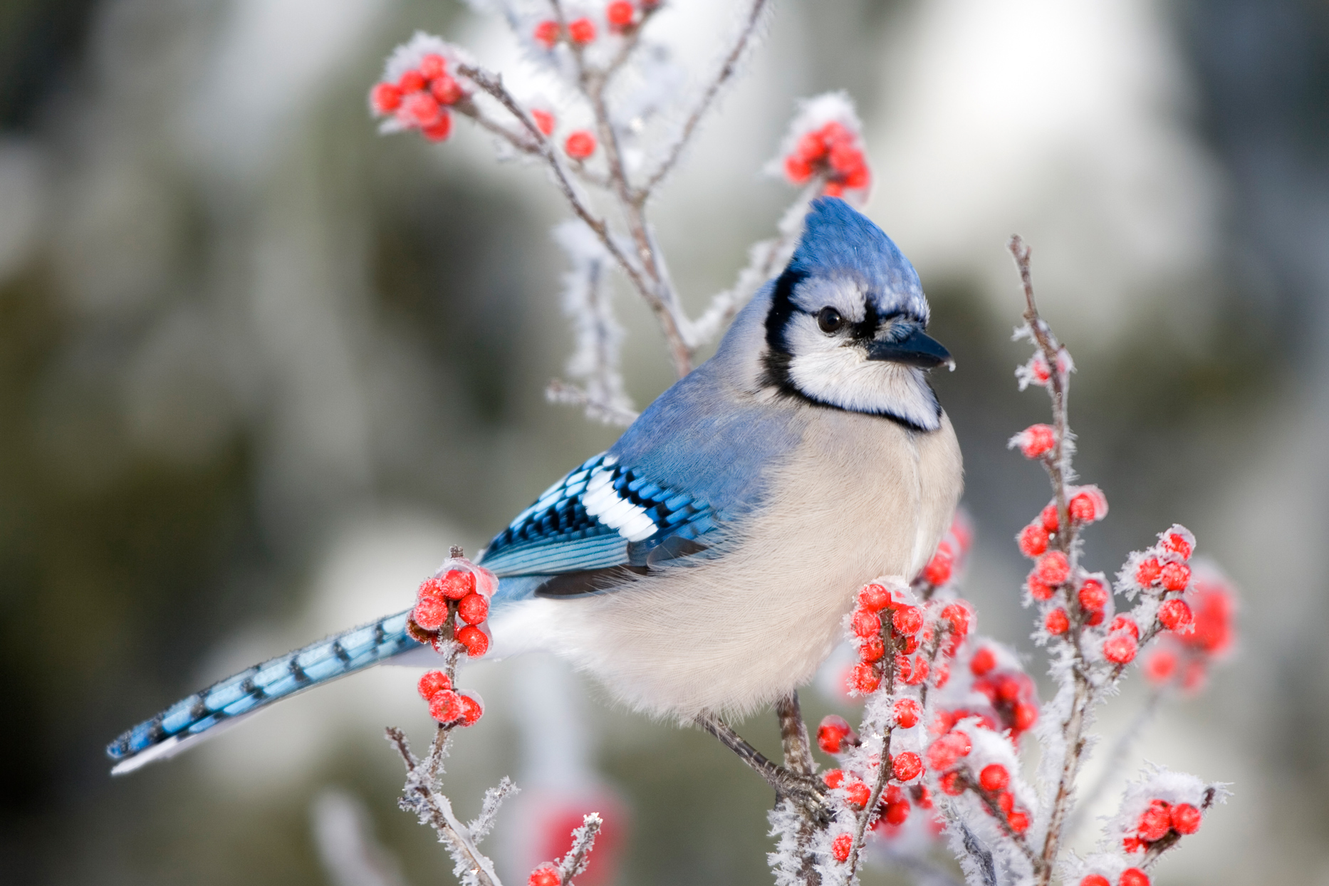The Most Common Backyard Birds You'll See During the Winter