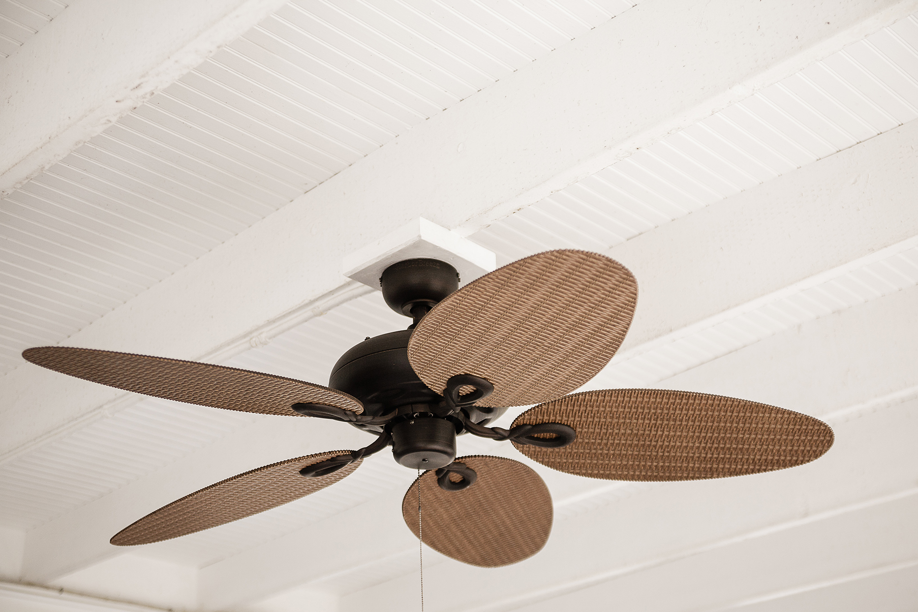 Ceiling fan with round blades