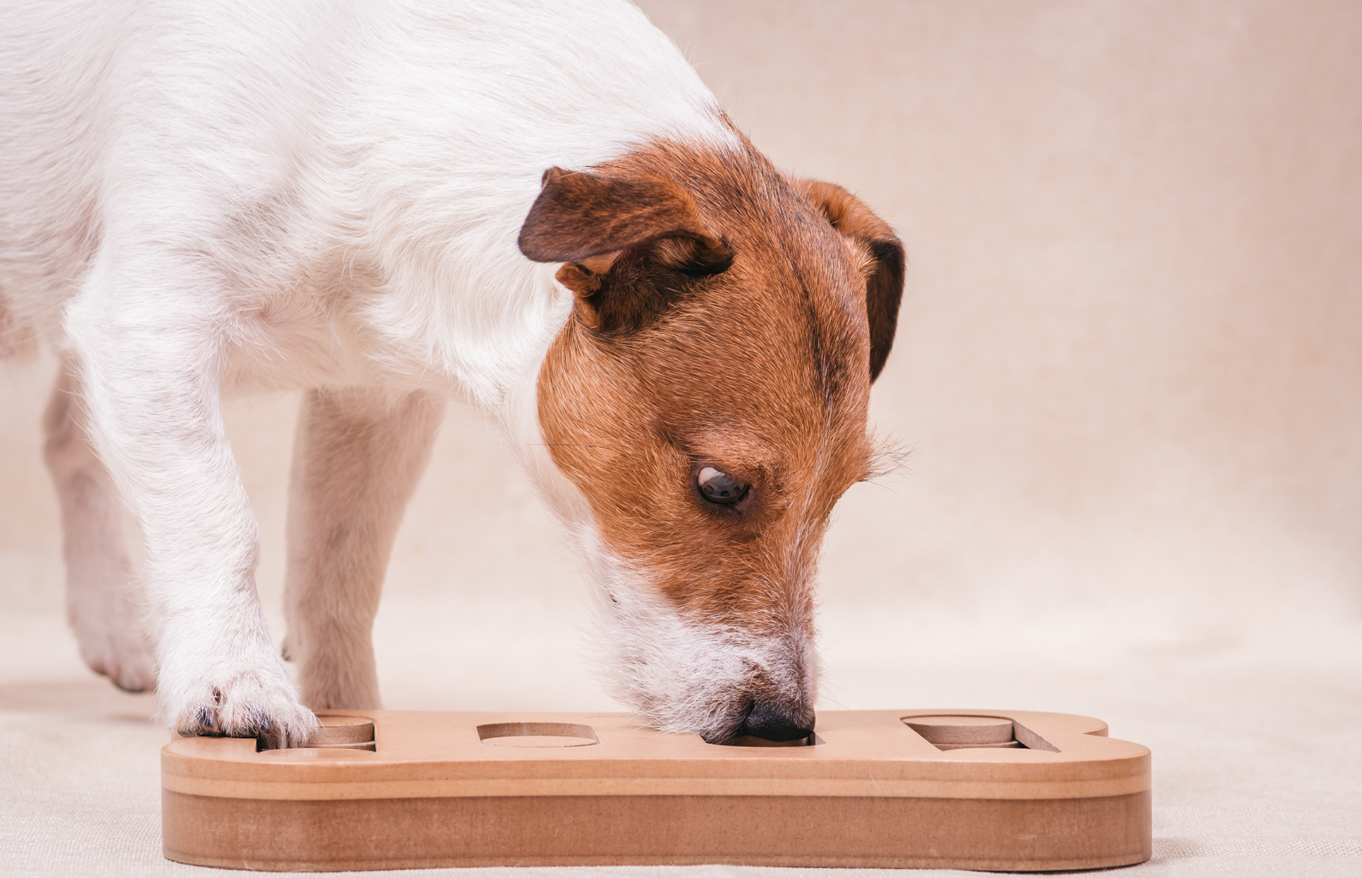 Dog playing with a puzzle