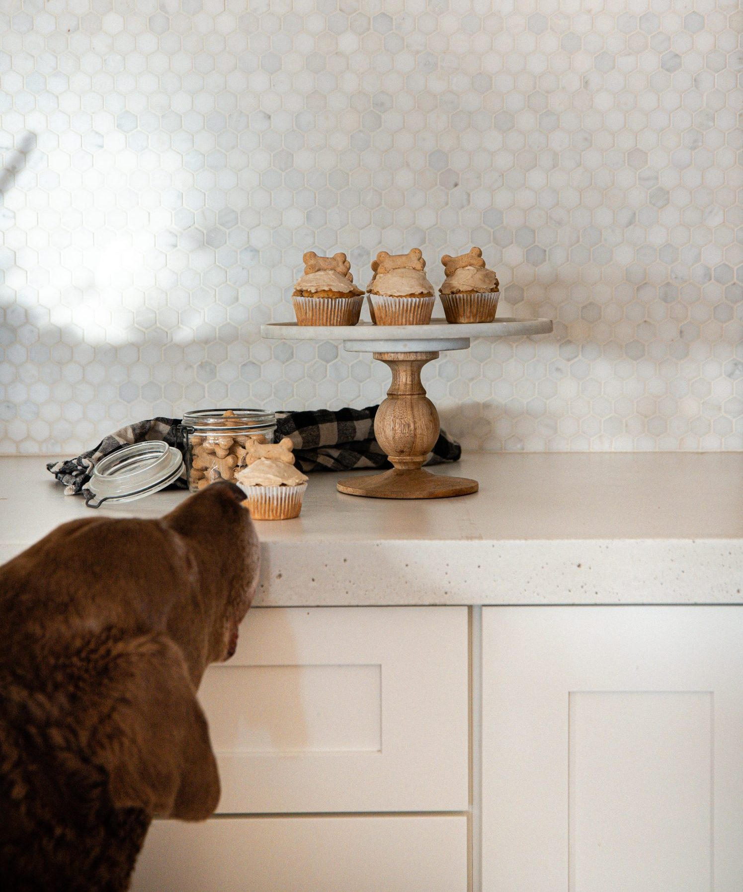 dog sniffing at a stand of pupcakes