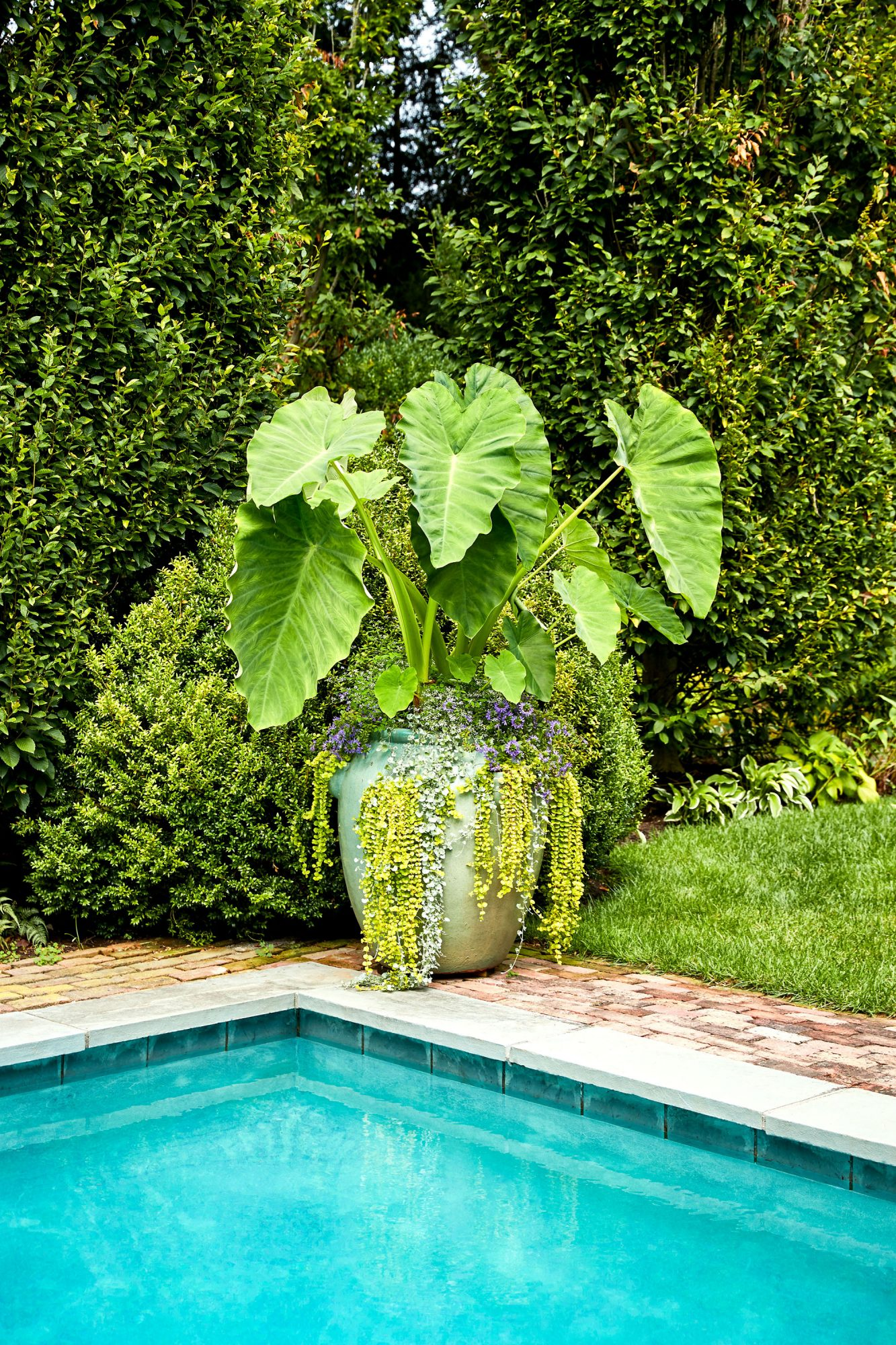 large container with plants at poolside