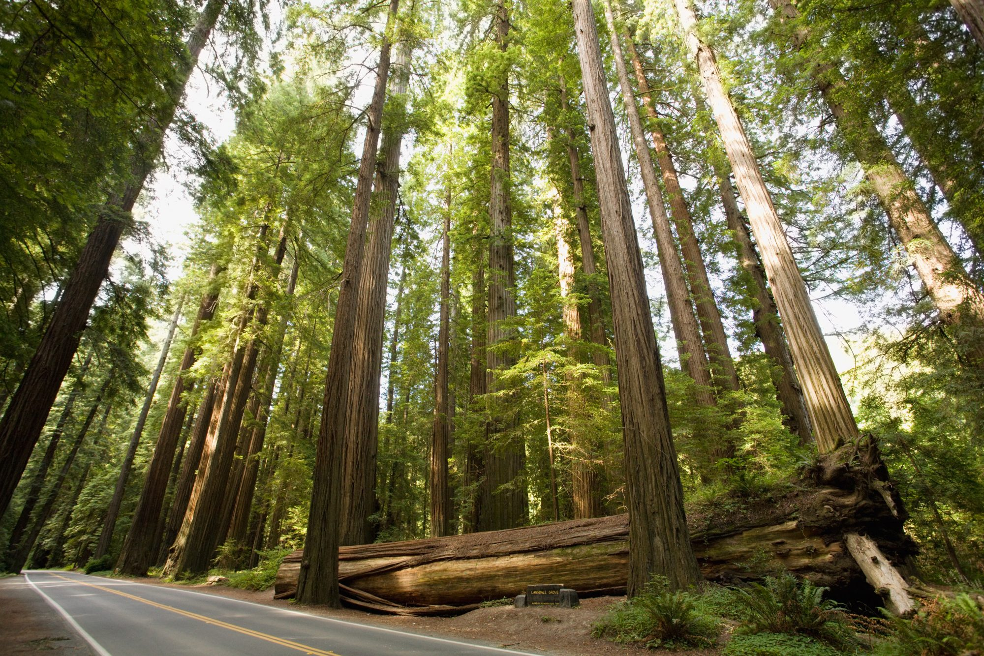 Avenue of the Giants in California