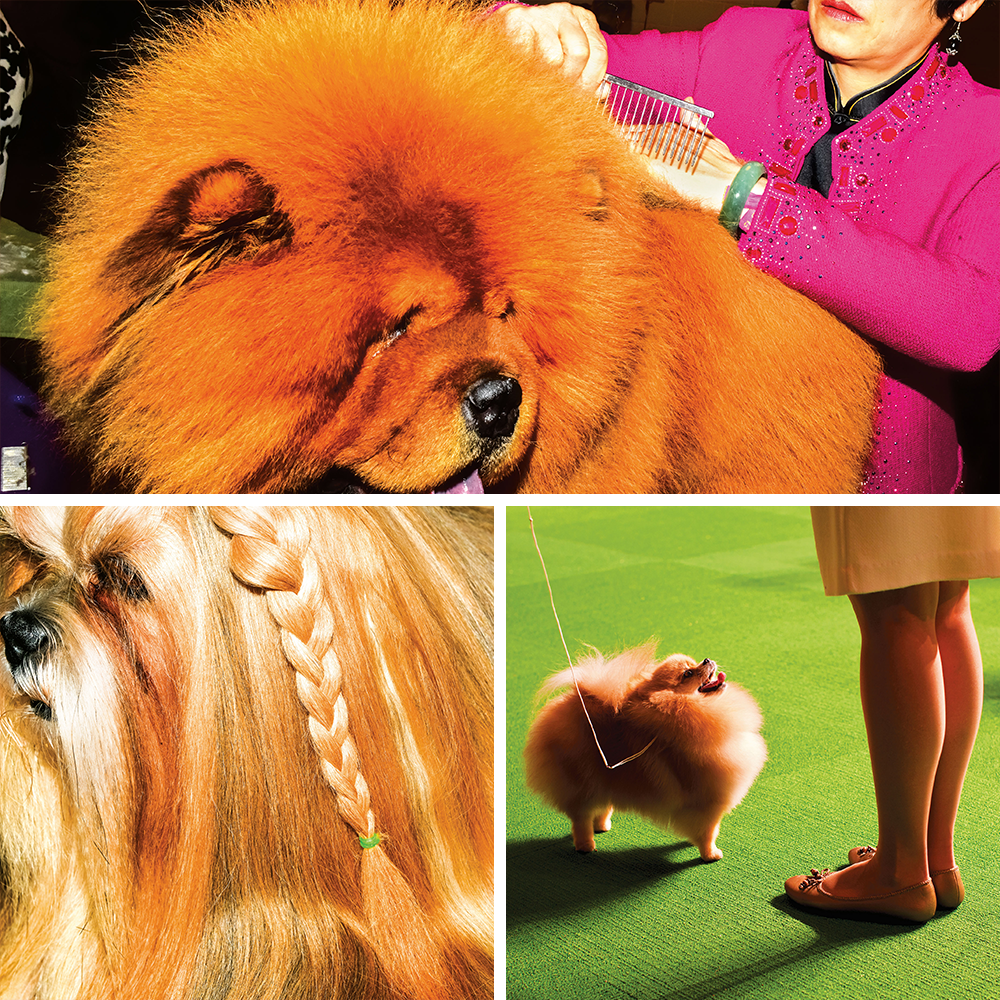 collage of photography at the Westminster Dog Show