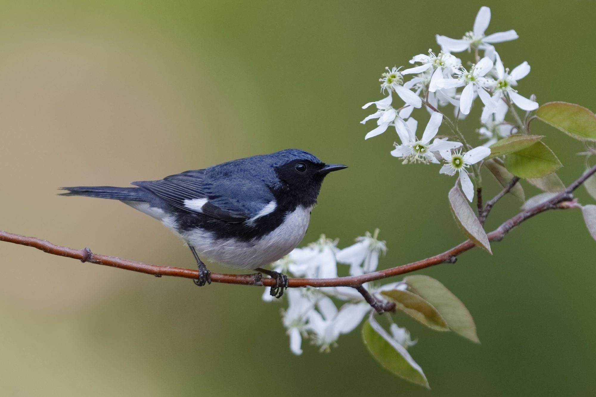 A New Study Finds That Bird Migration Begins Earlier Each Spring