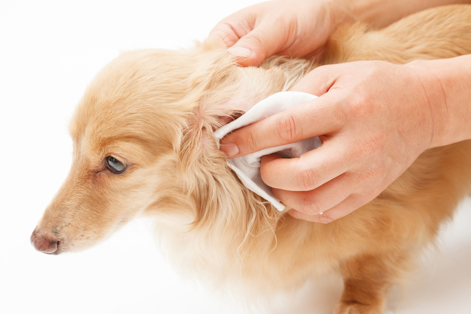 How to Clean Your Pet's Ears—Plus, How Often You Need to Do It