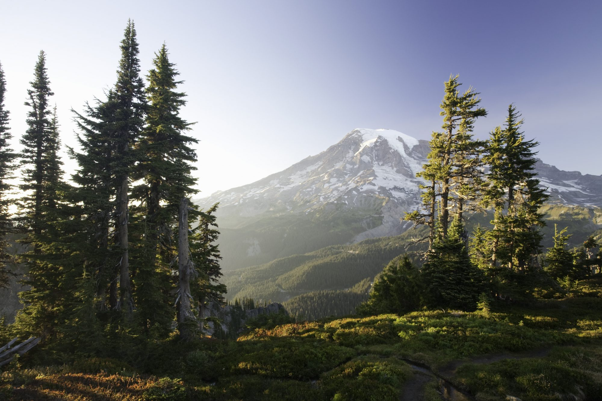 Mount Rainier and Alpine Forest at Sunset