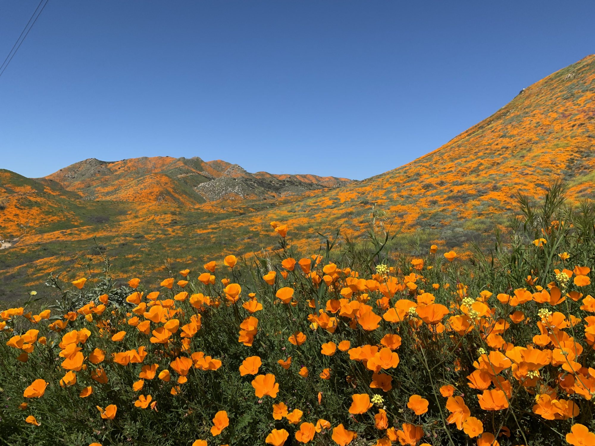 What Is a Super Bloom, and Where Can You See One?