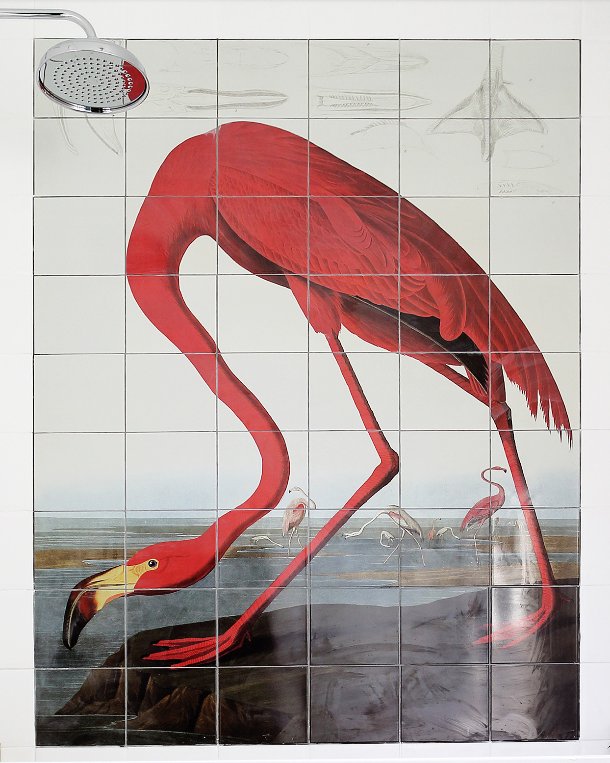 Surface View Greater Flamingo tiles