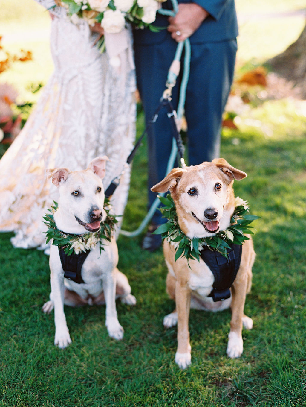 sara trisdan wedding dogs wearing greenery wreaths