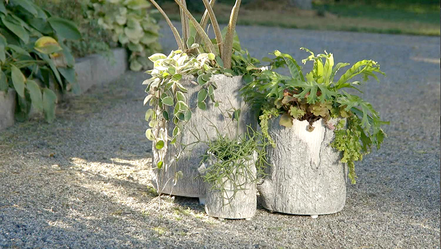 Three log planters outdoors
